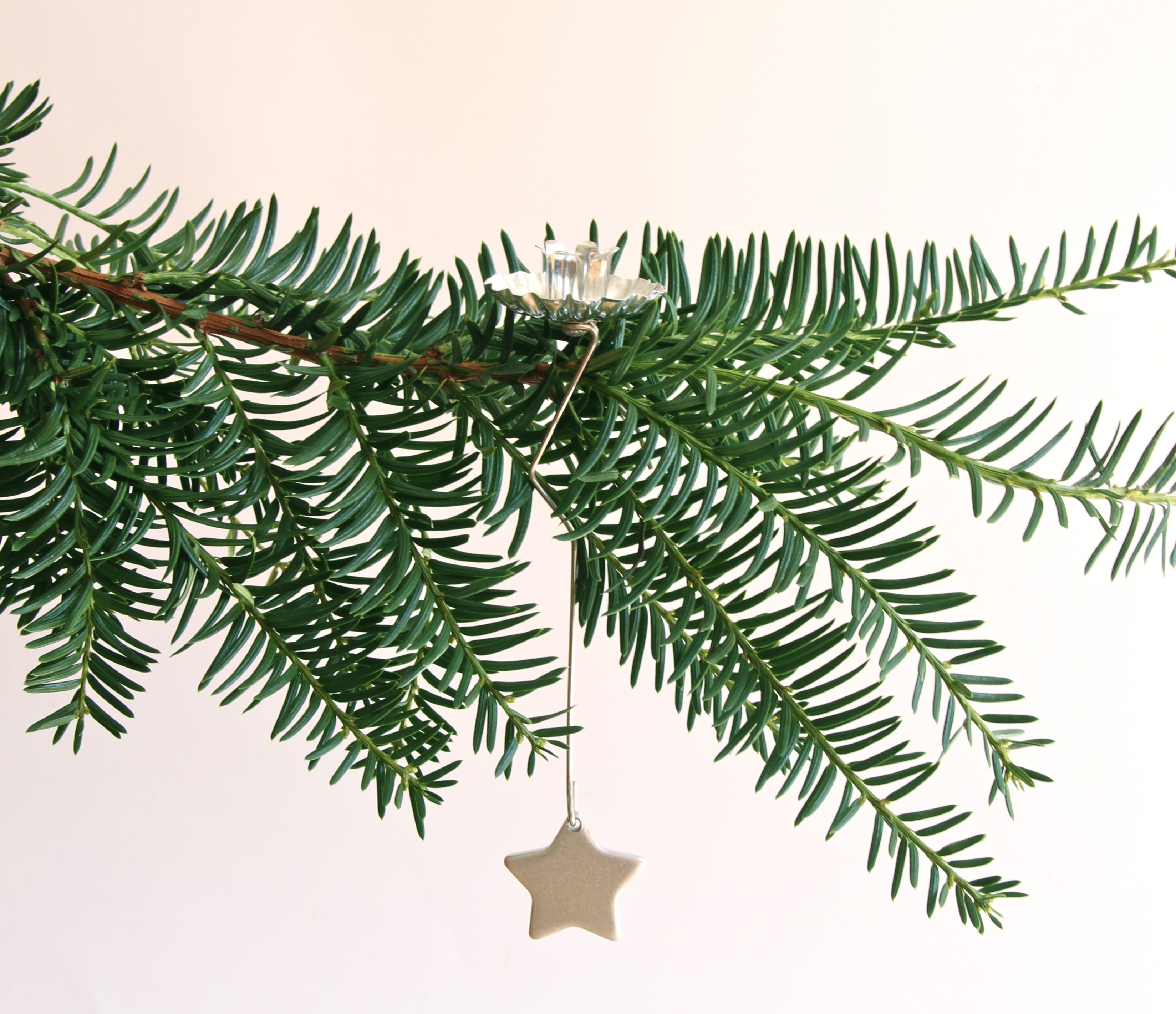 Free photo: Christmas tree branch - Branches, Christmas, Christmastree - Free Download - Jooinn