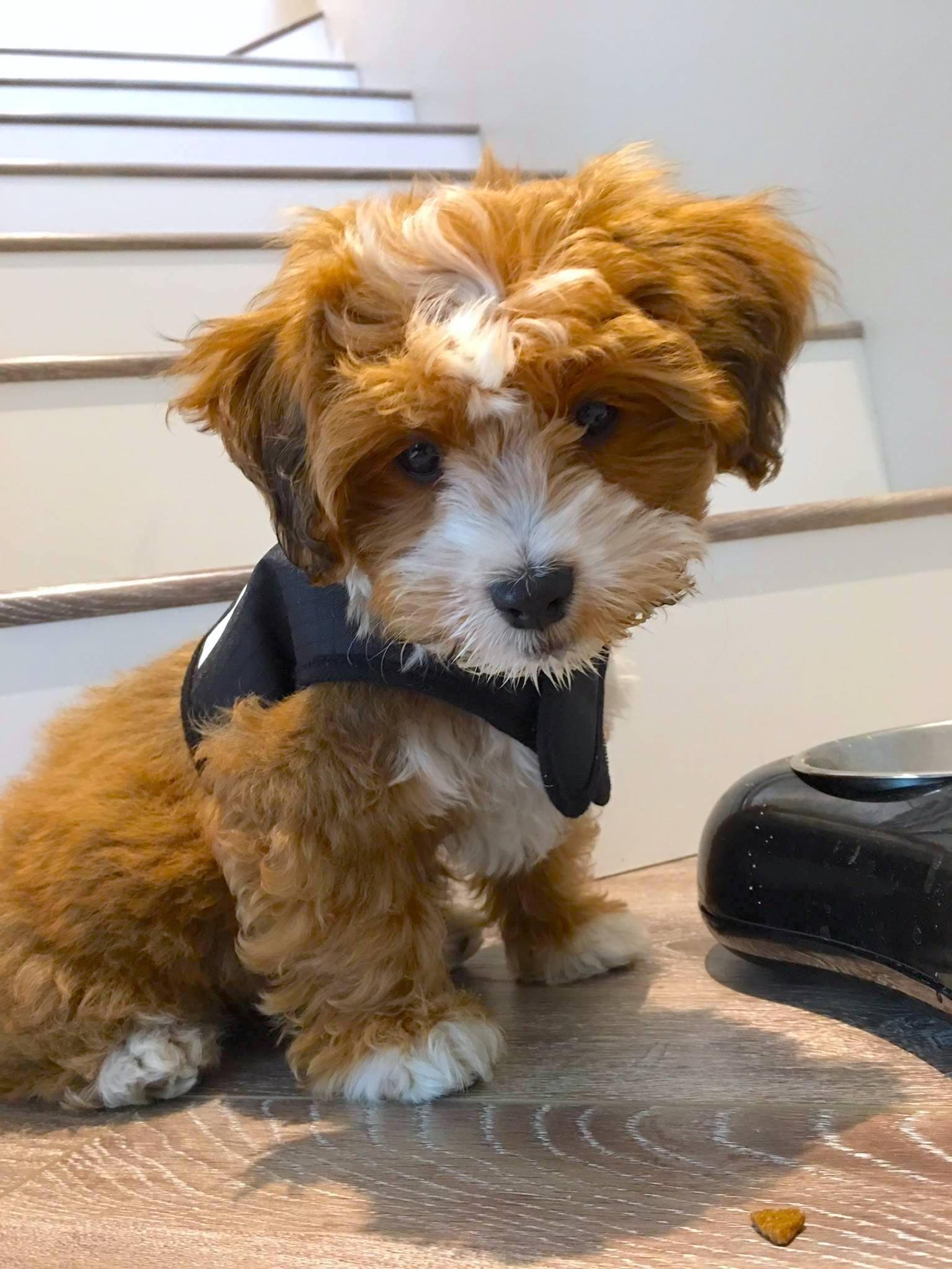 Cinnamon dog photo