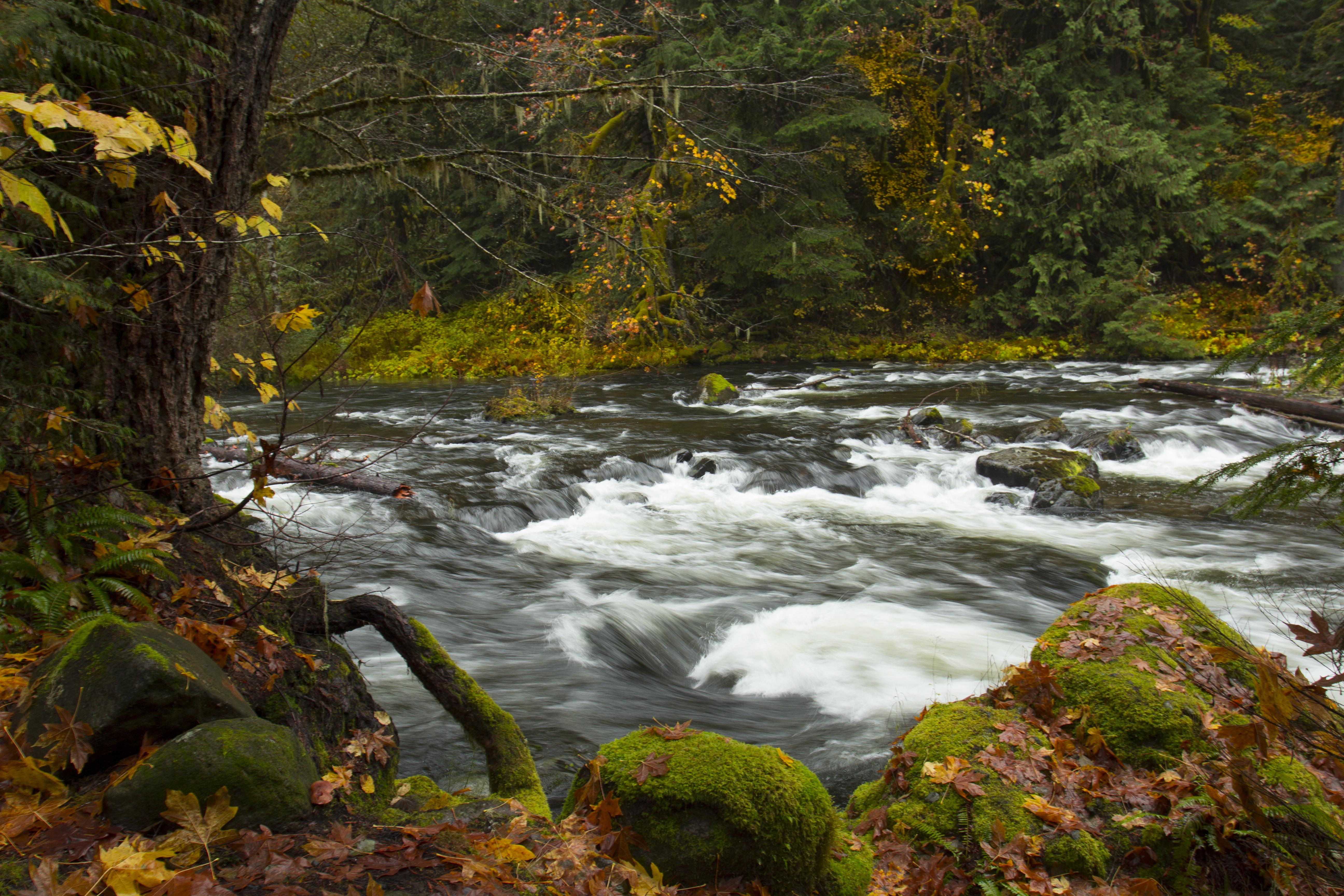 Clackamas River, Oregon, Autumn, Creek, Fall, Forest, HQ Photo