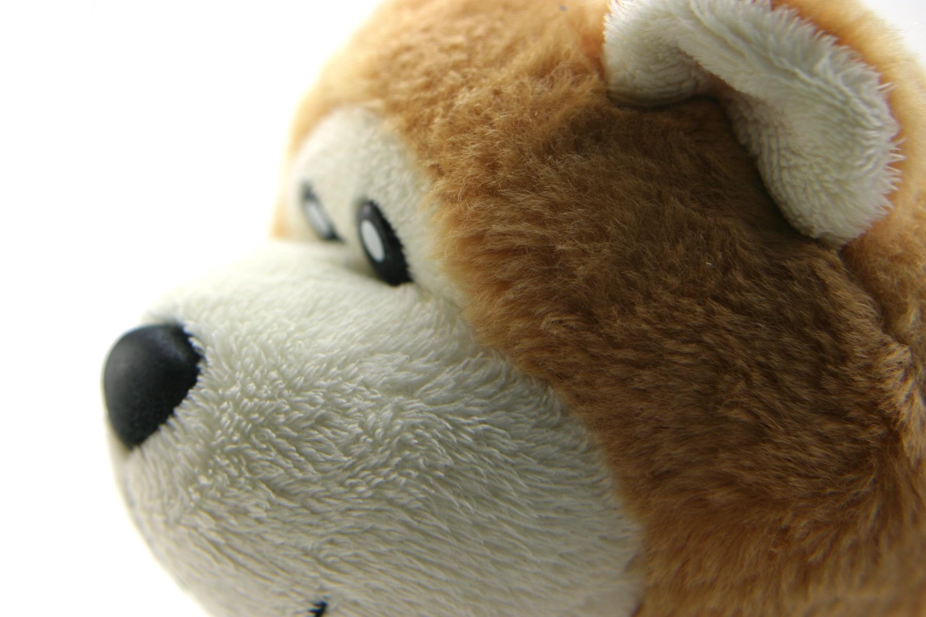 Classic teddy bear, Animal, Small, Old, Path, HQ Photo