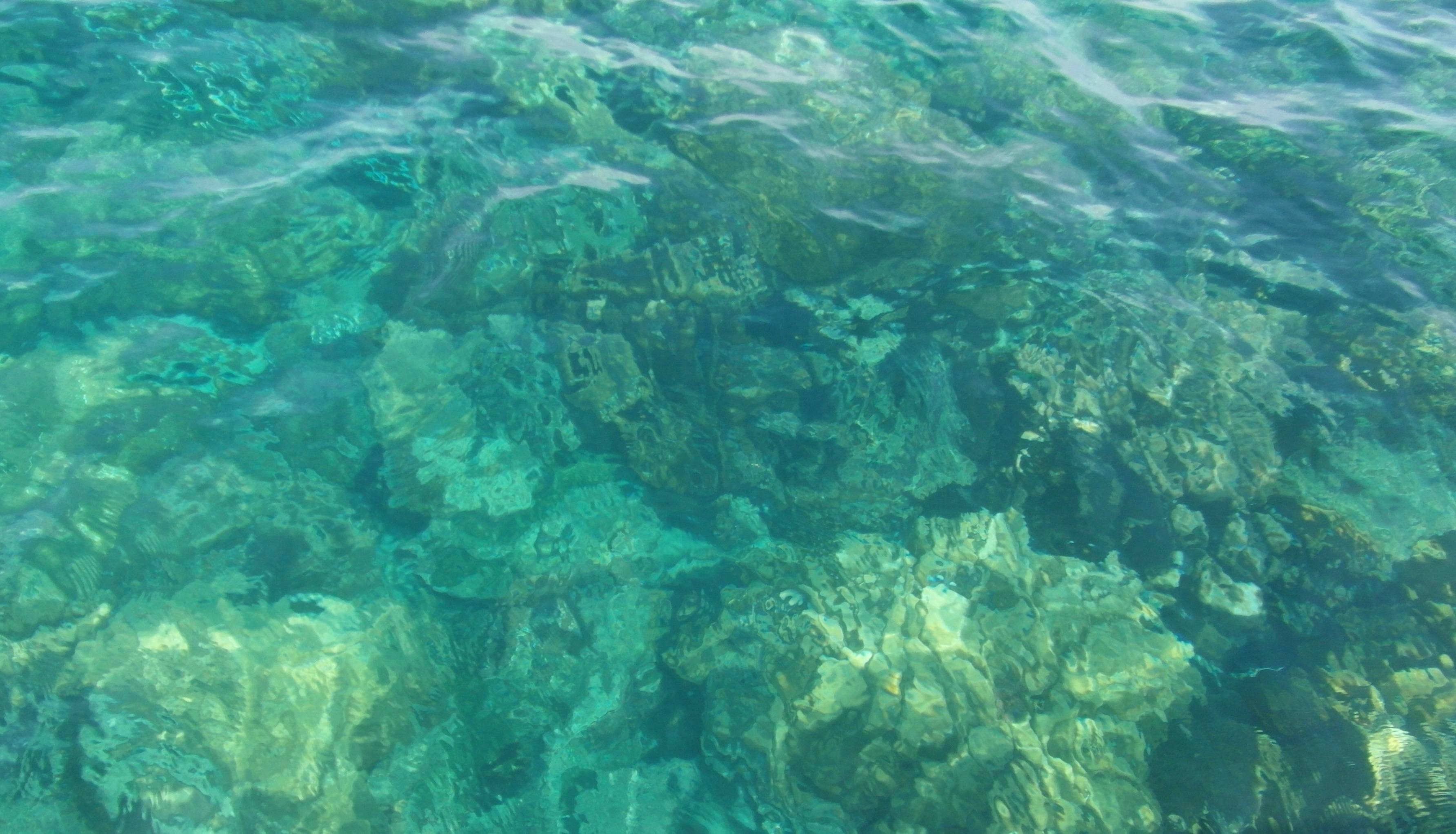 Clear Ocean Coral Background, Marine, Water, Turquoise, Tropical, HQ Photo
