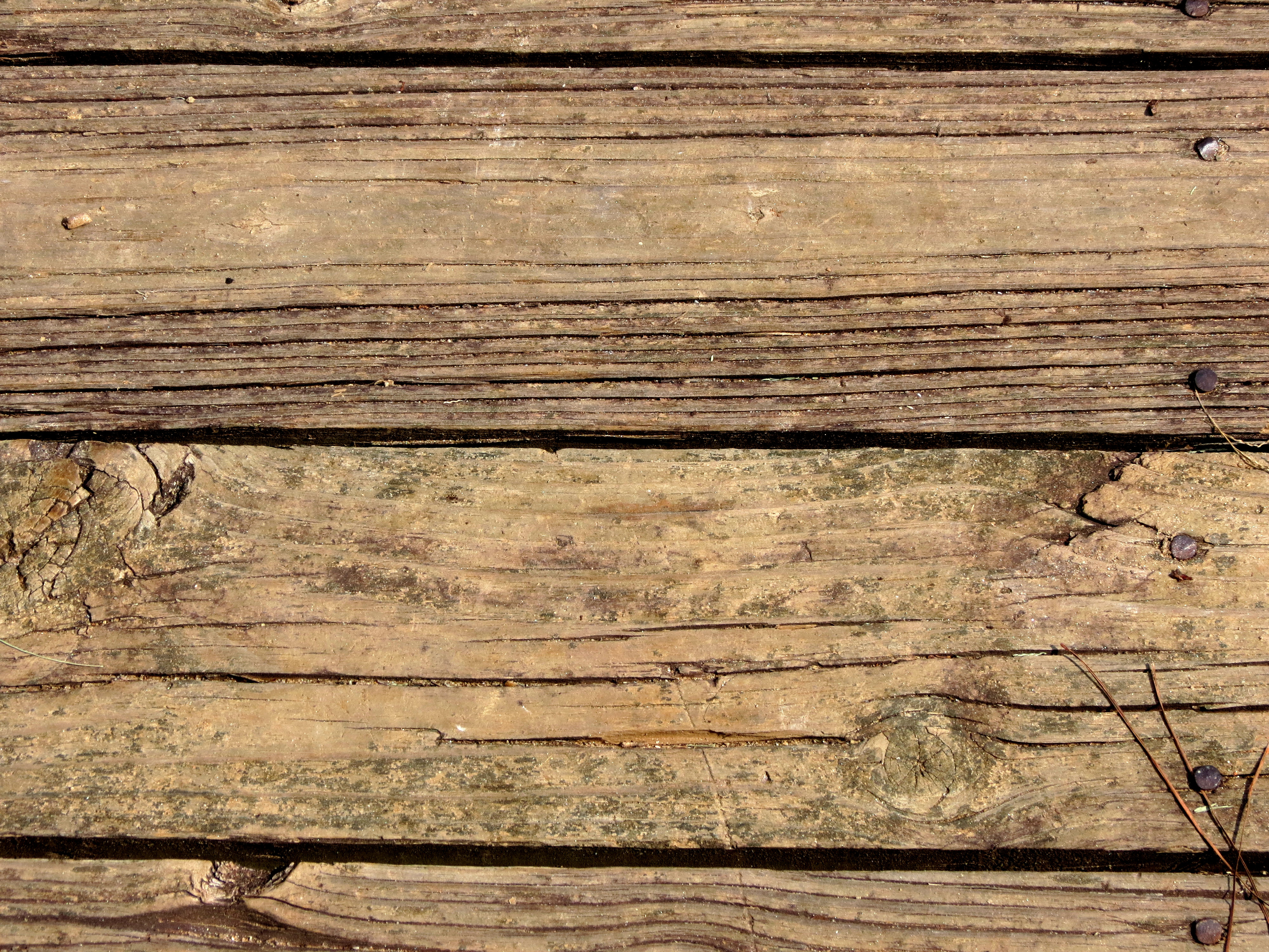 Close-up of a wooden texture photo