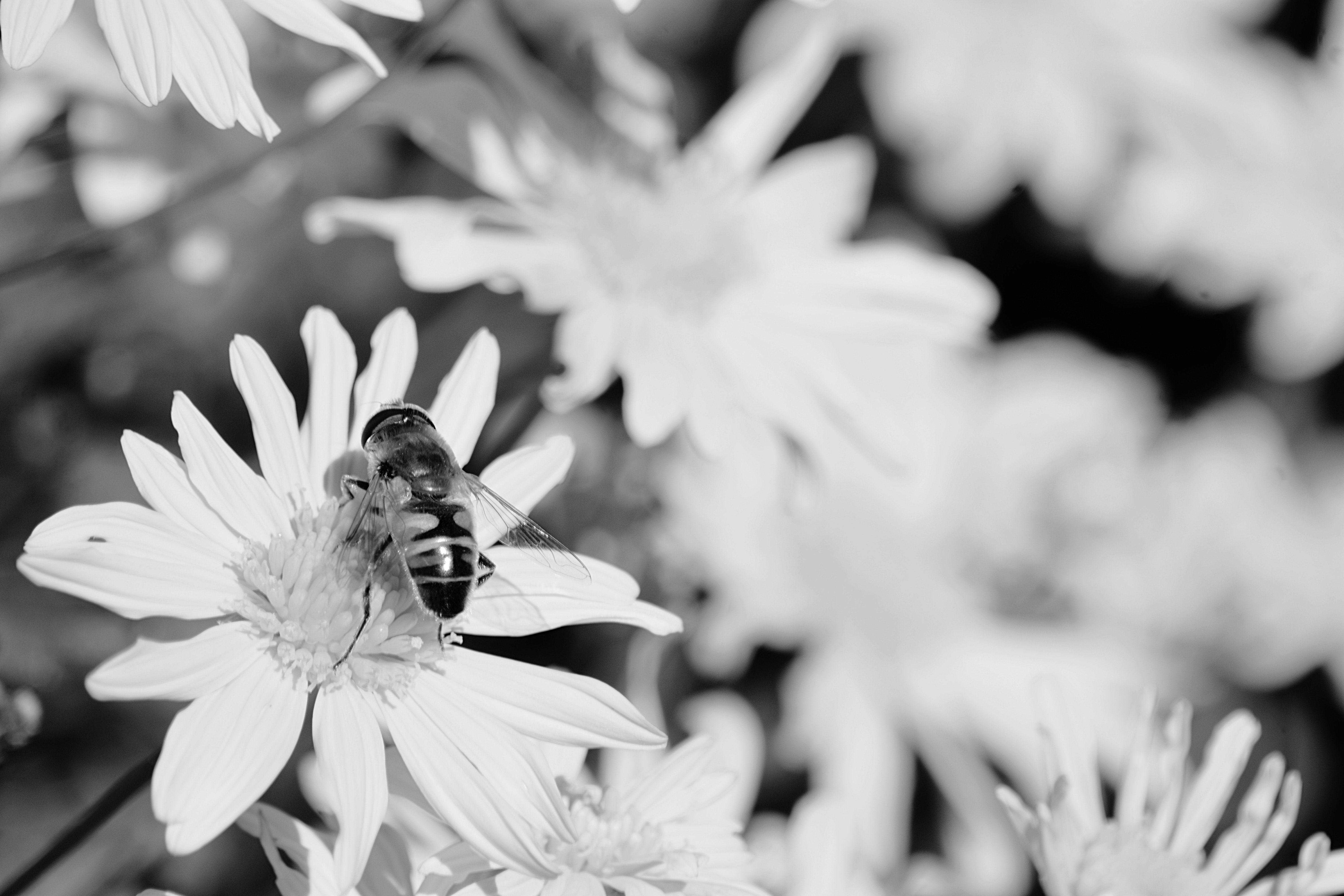 Close Up Of Bee On Flower Photo
