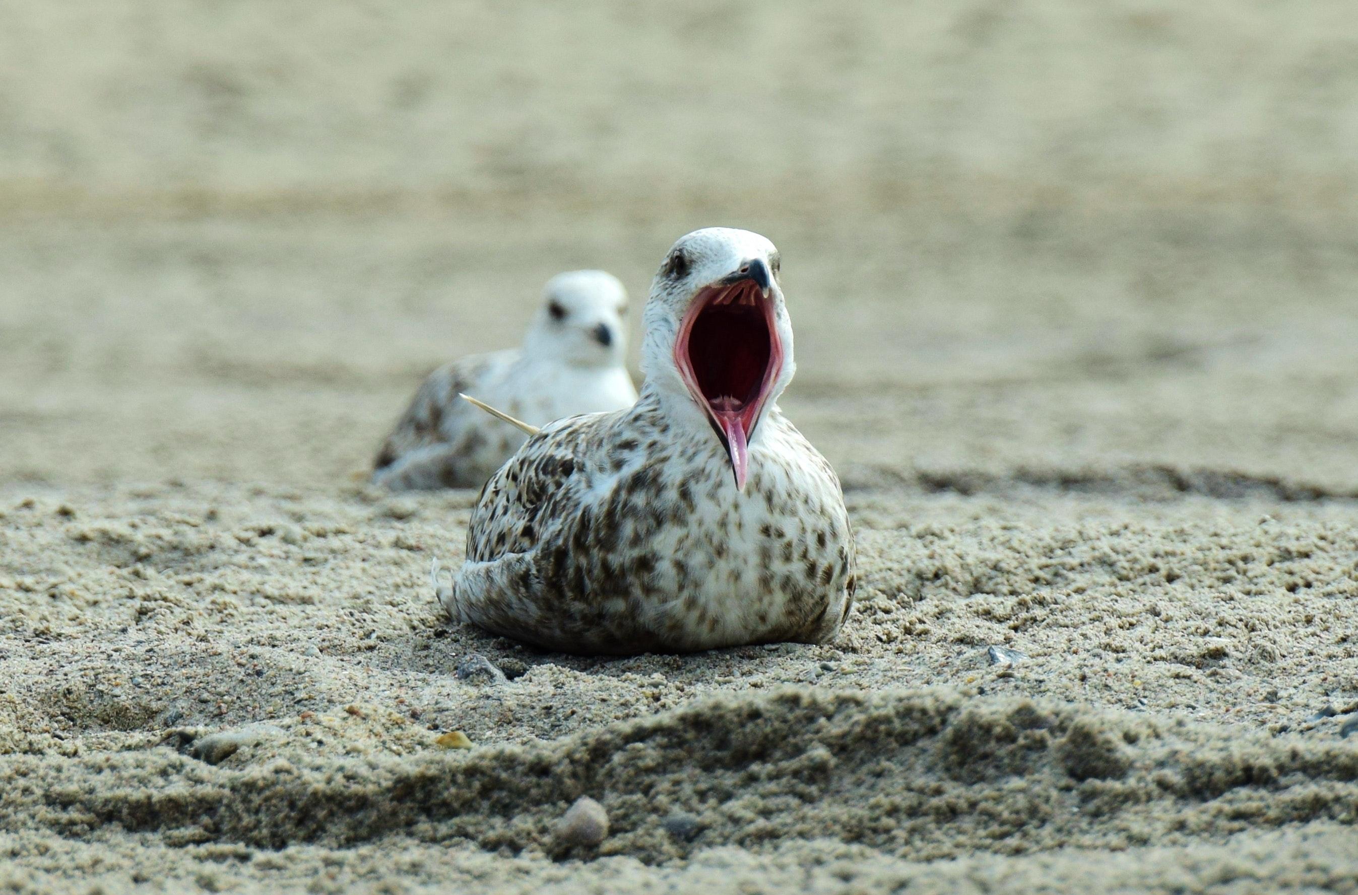 Close-up of bird on beach photo
