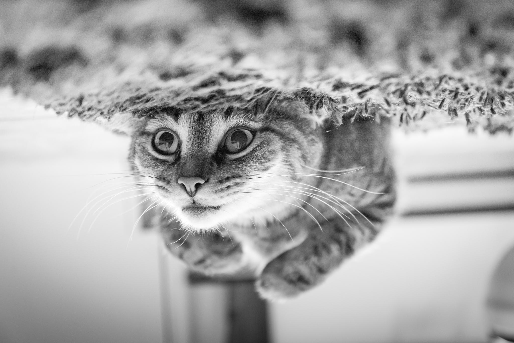 Close-up of Cat, Adorable, Head, Whiskers, Upside down, HQ Photo