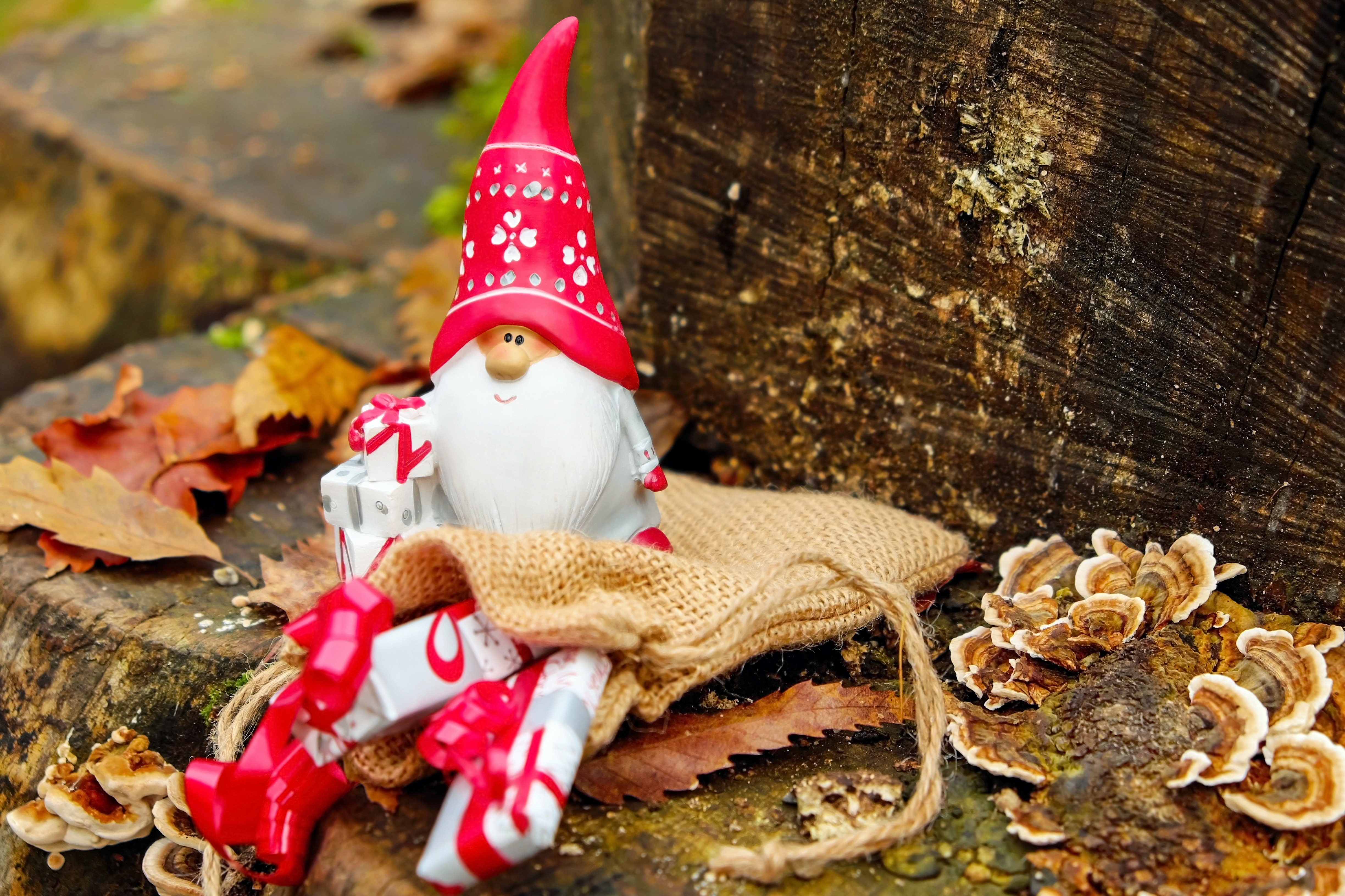 Close-up of christmas decoration photo