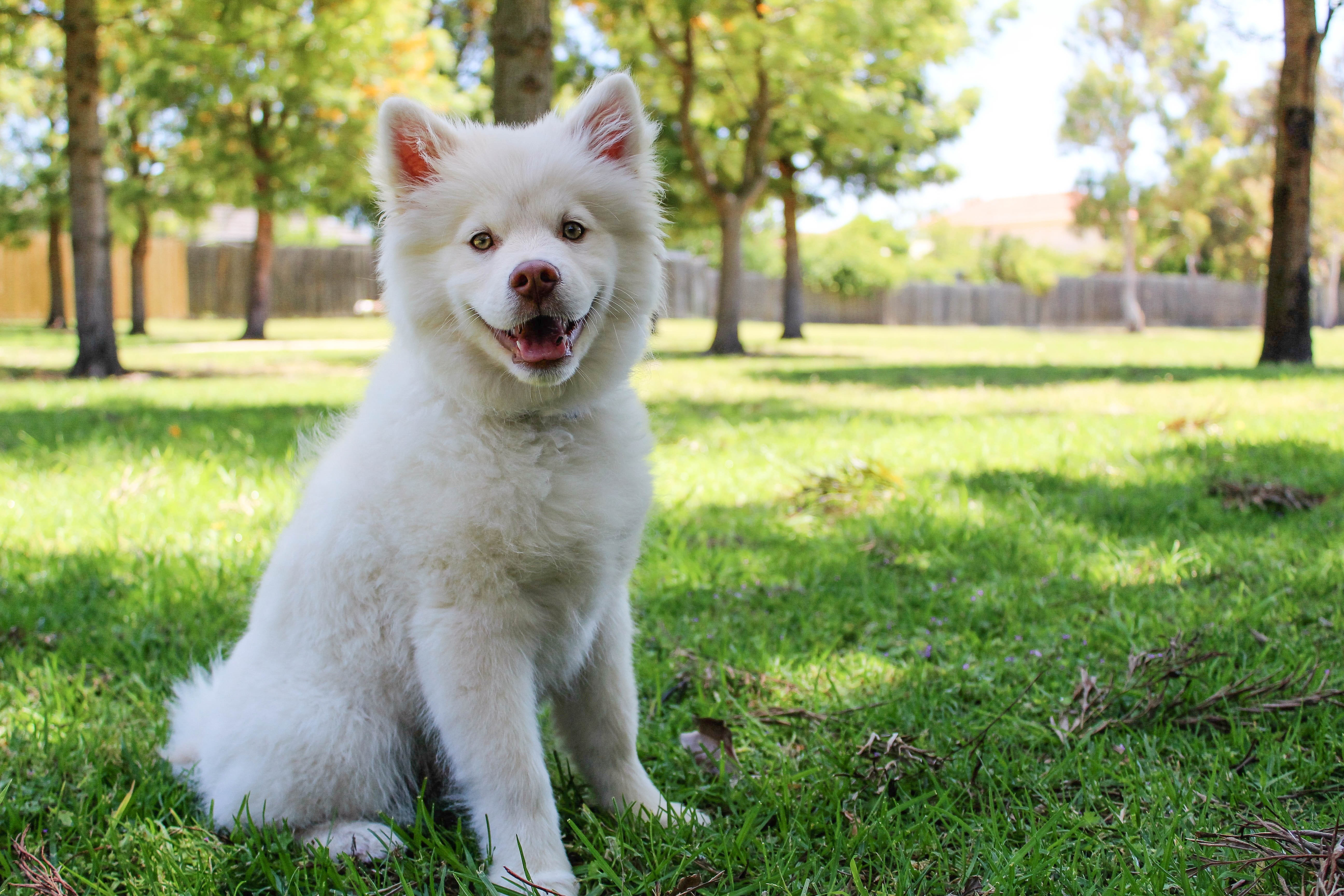 Close-up of Dog  on Grass, Adorable, Mammal, Weather, Warm, HQ Photo