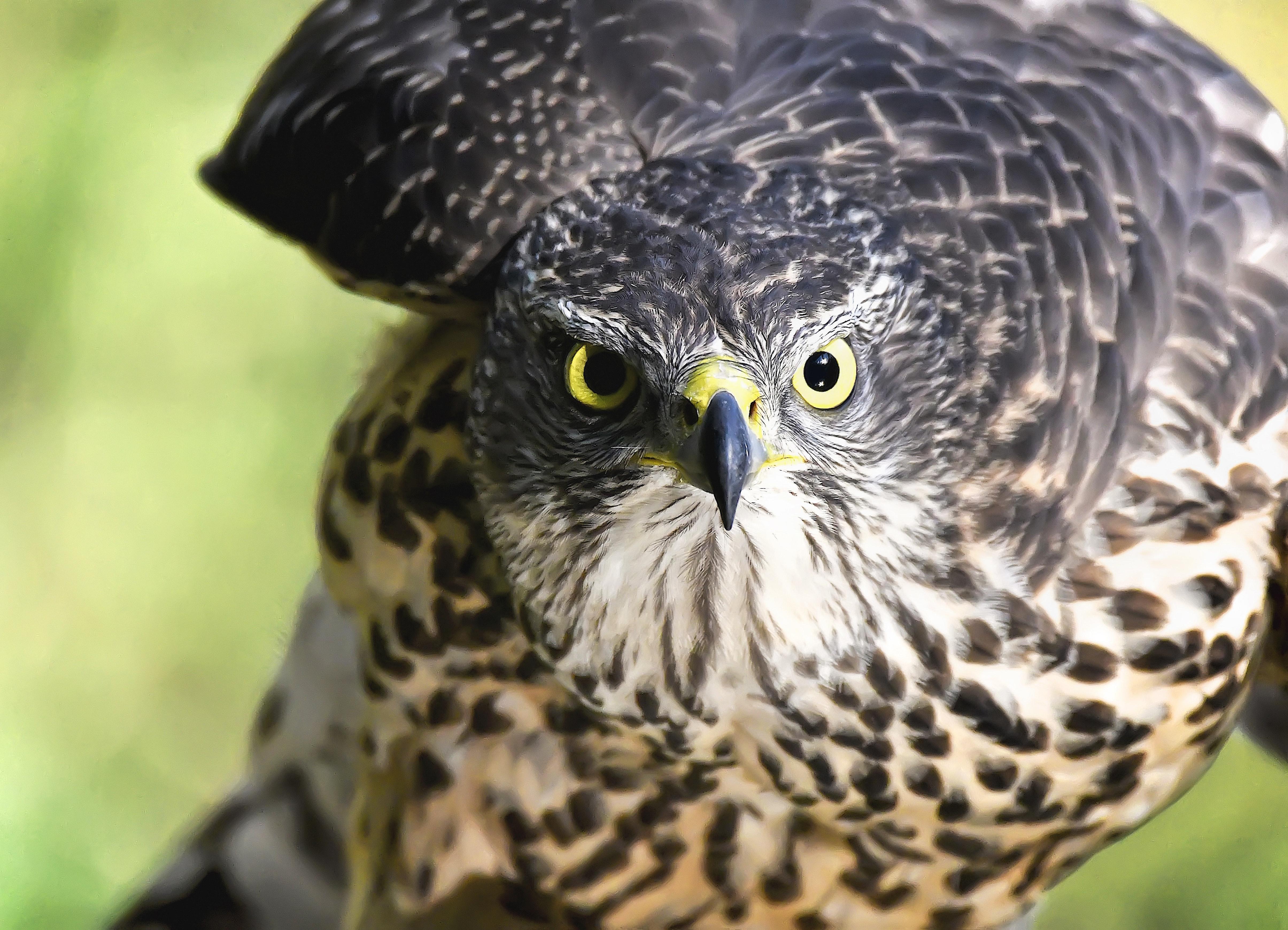 Close-up of eagle photo