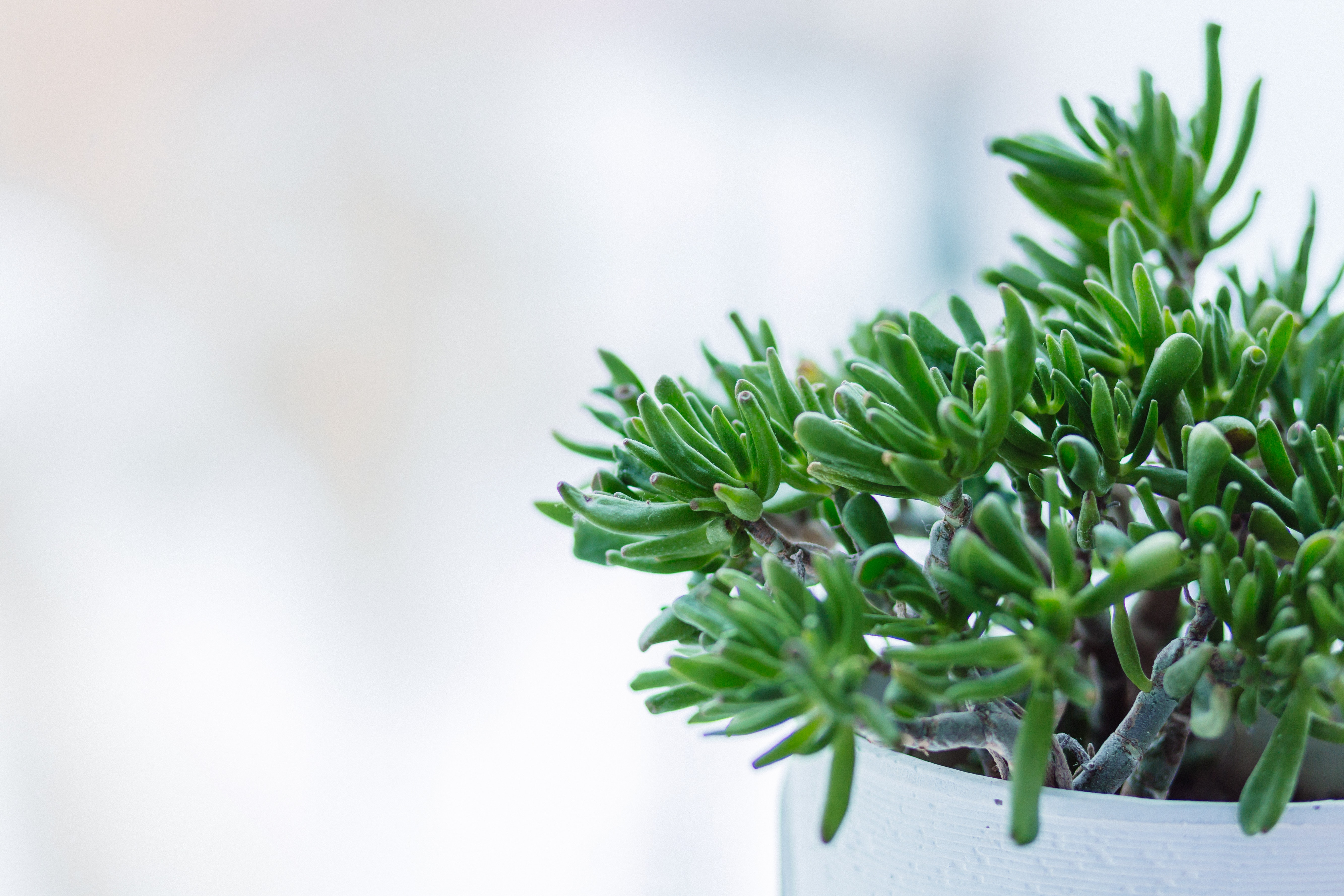 Close-up of fresh green plant against tree photo