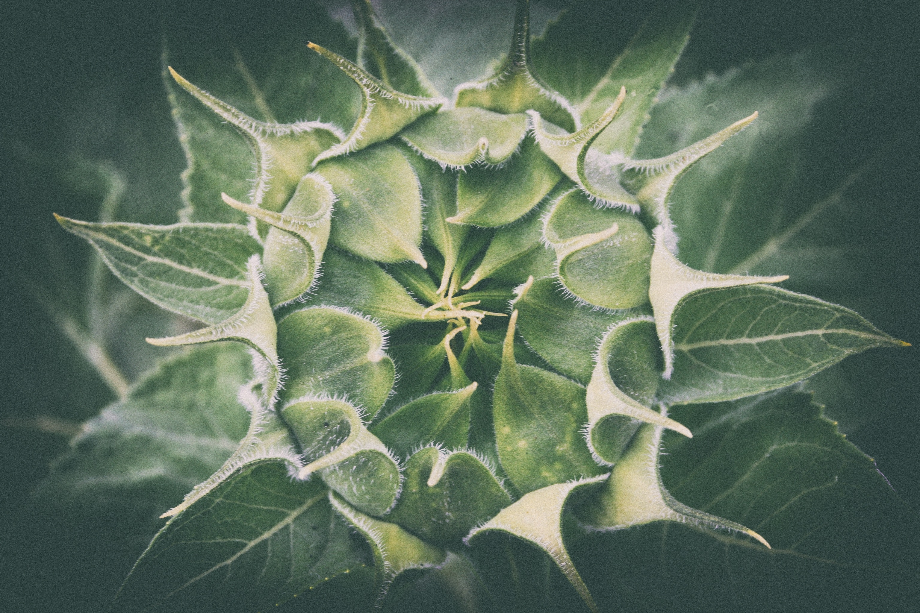 Close-up of Plant, Beautiful, Leaves, Summer, Succulent, HQ Photo