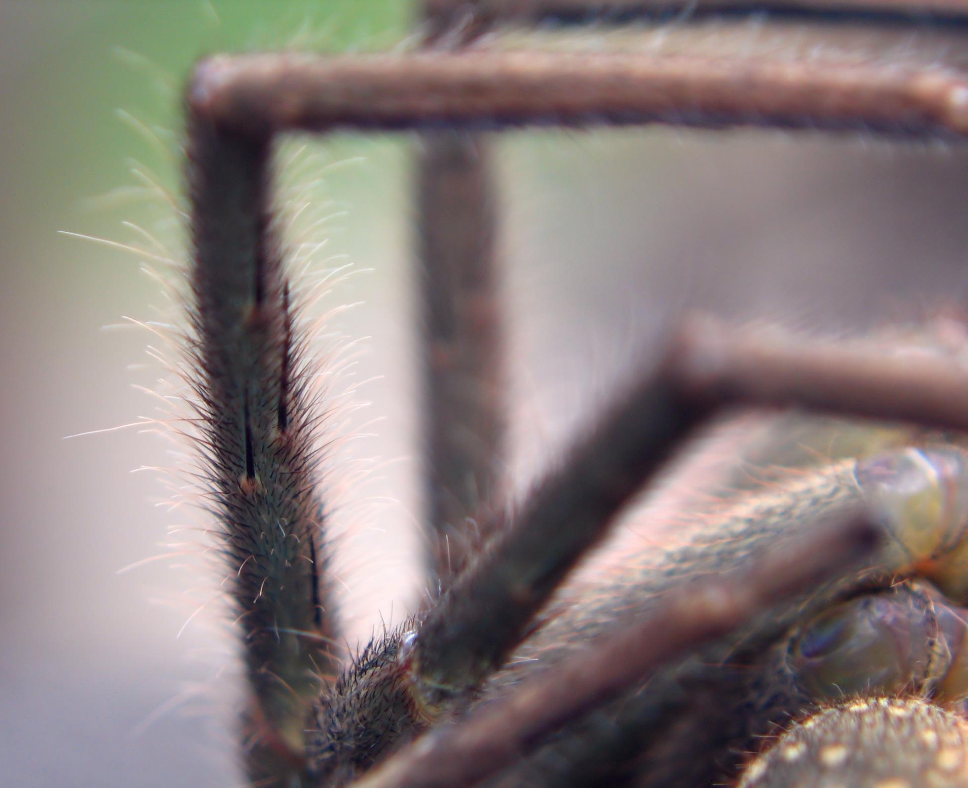 Close up of  spider legs photo