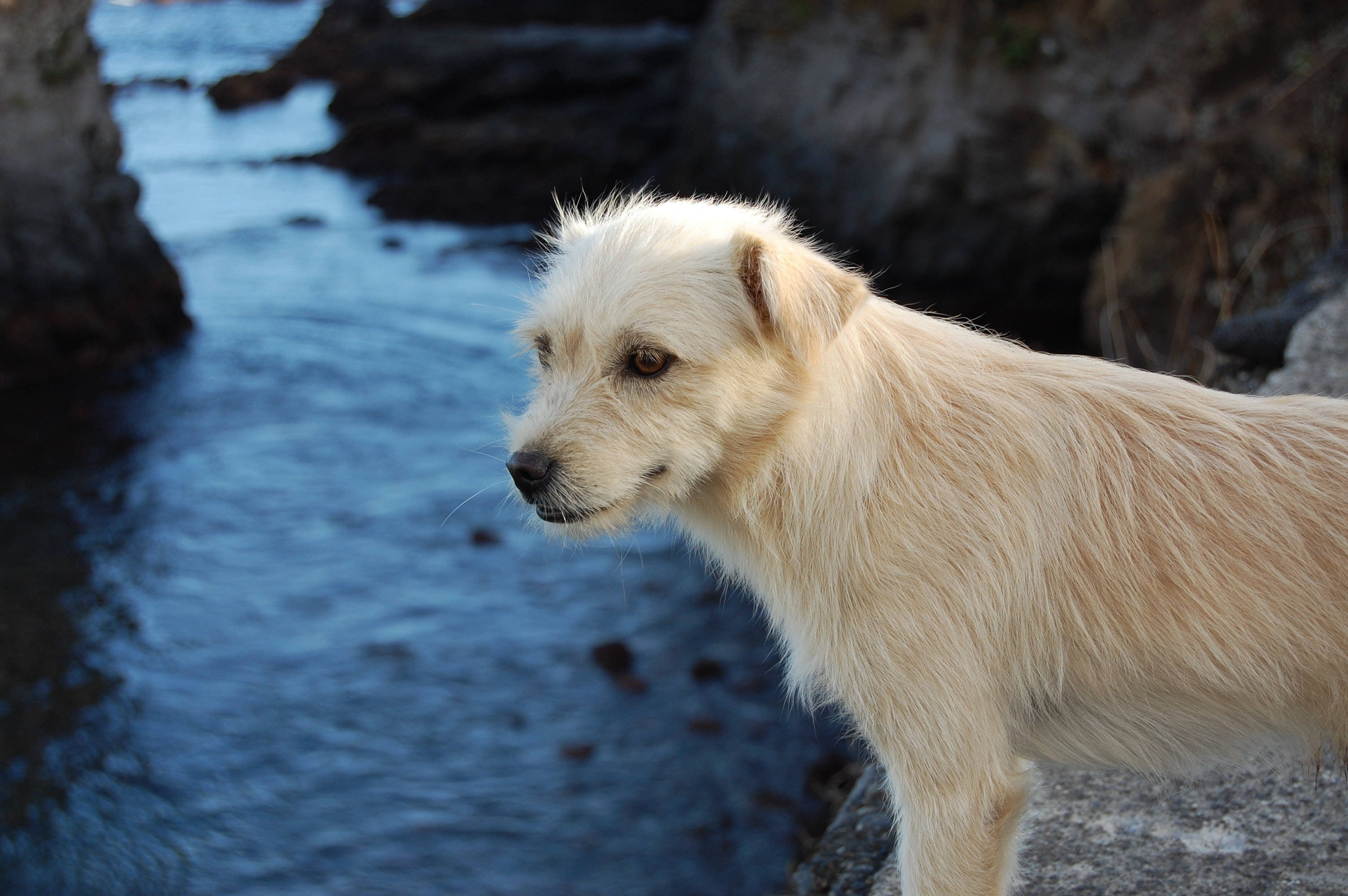 Close-up of wet dog by lake photo