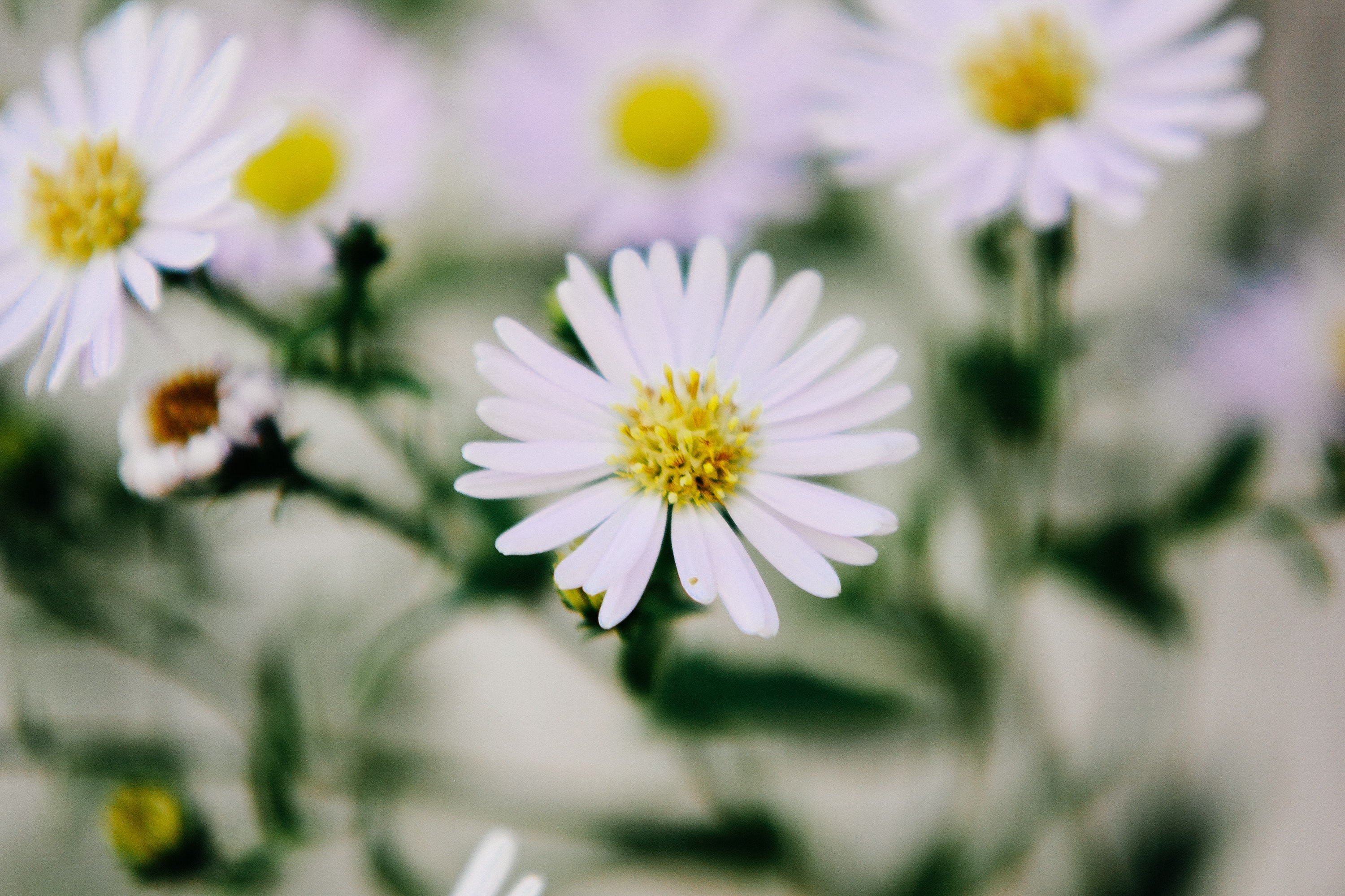 Close-up of white flowers photo