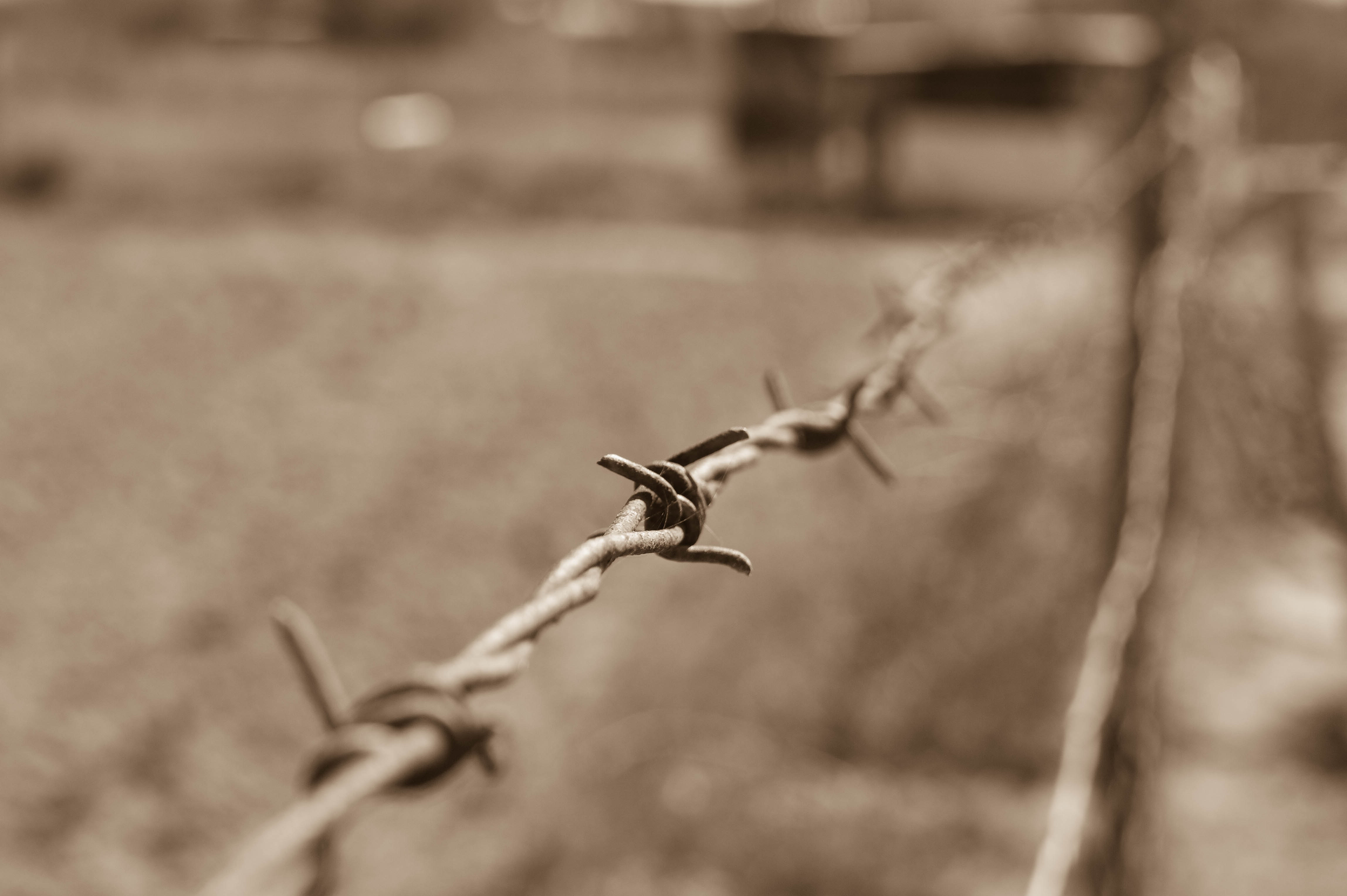 Close-up of Wire Against Blurred Background, Art, Safety, Steel, Sharp, HQ Photo