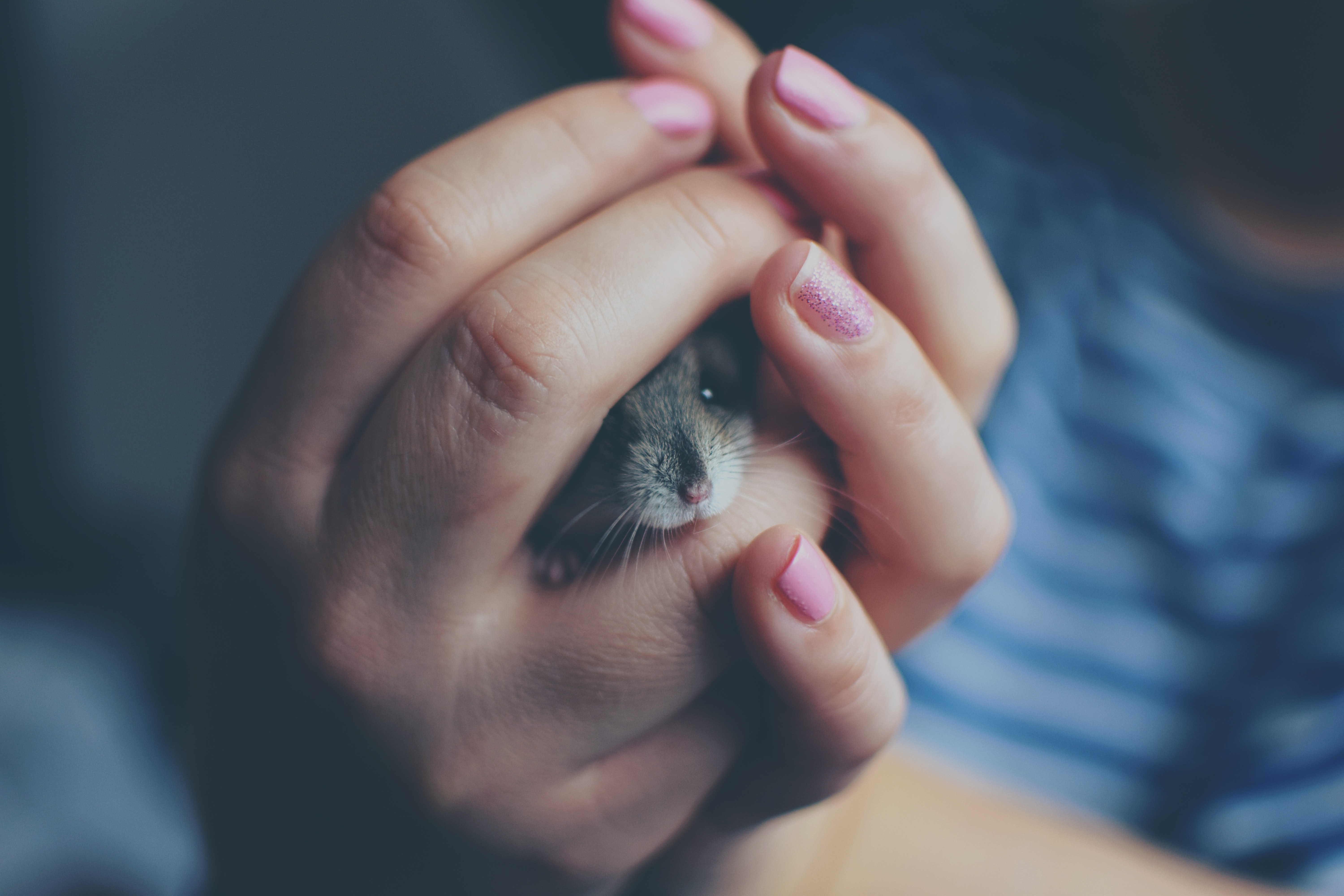 Close-up of woman holding a hamster photo