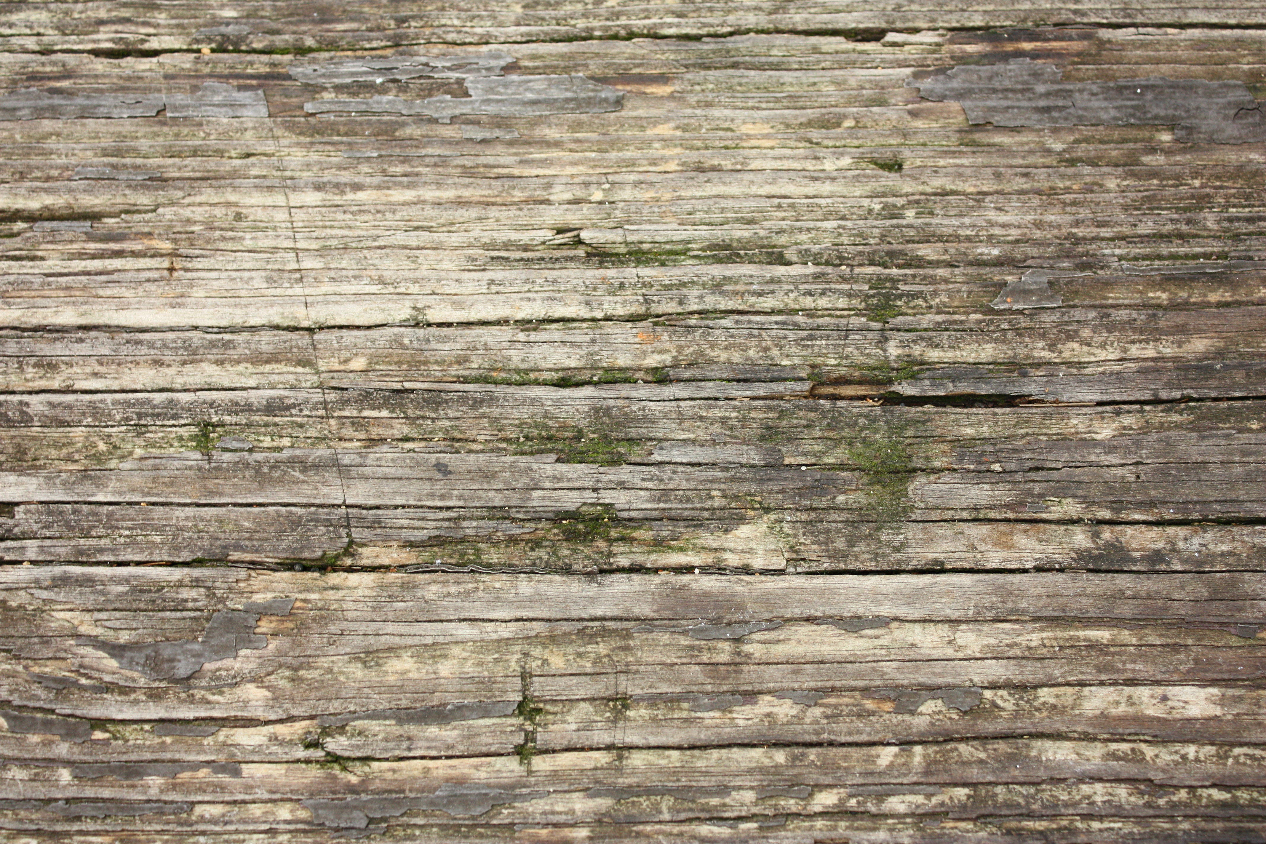 Close-up of wood grain with moss, Grain, Moss, Nature, Wood, HQ Photo