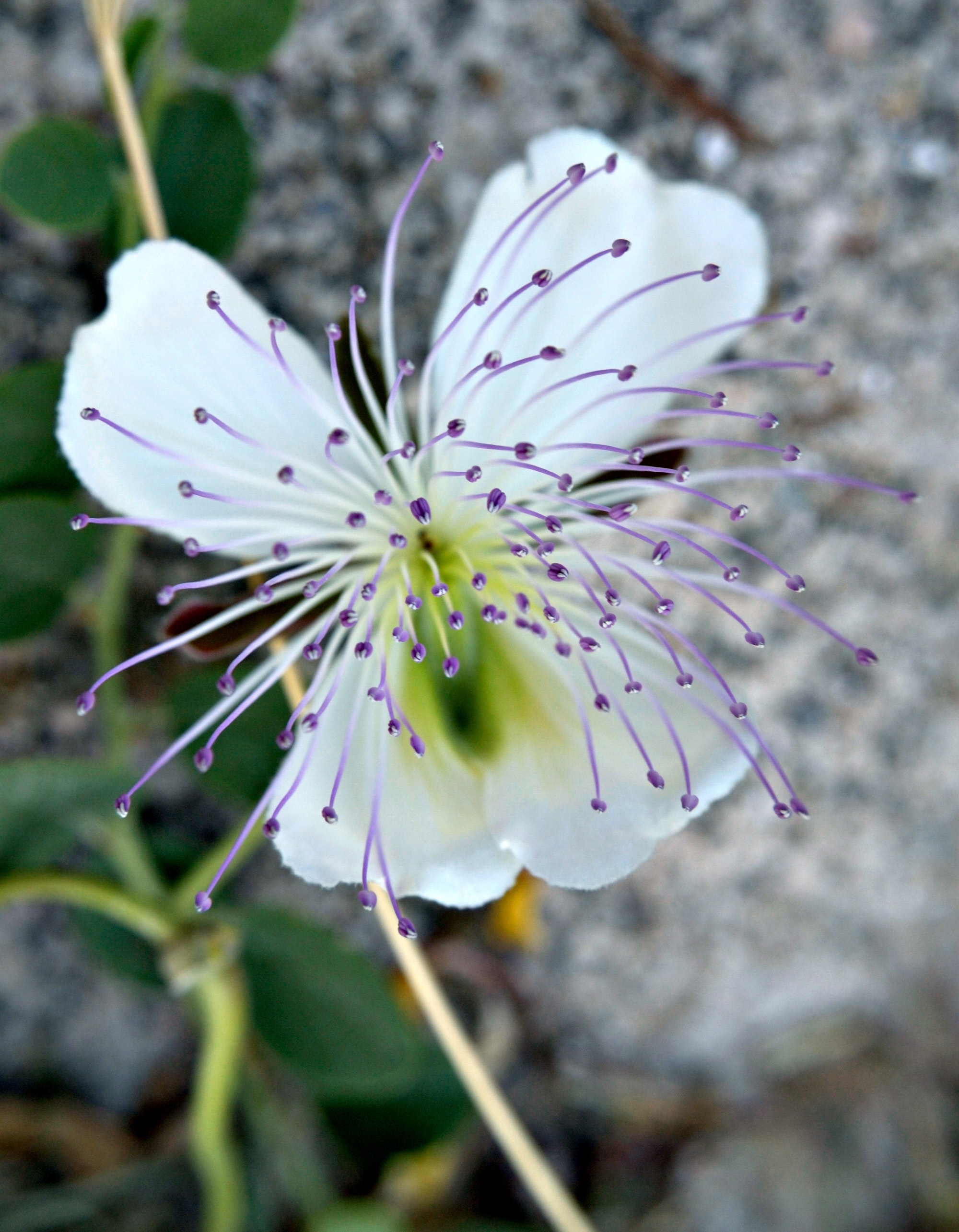 Close-up phorography of white and purple flower photo