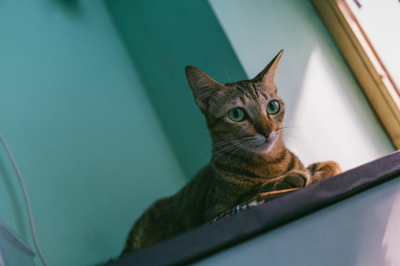 Close-up photo of a cat