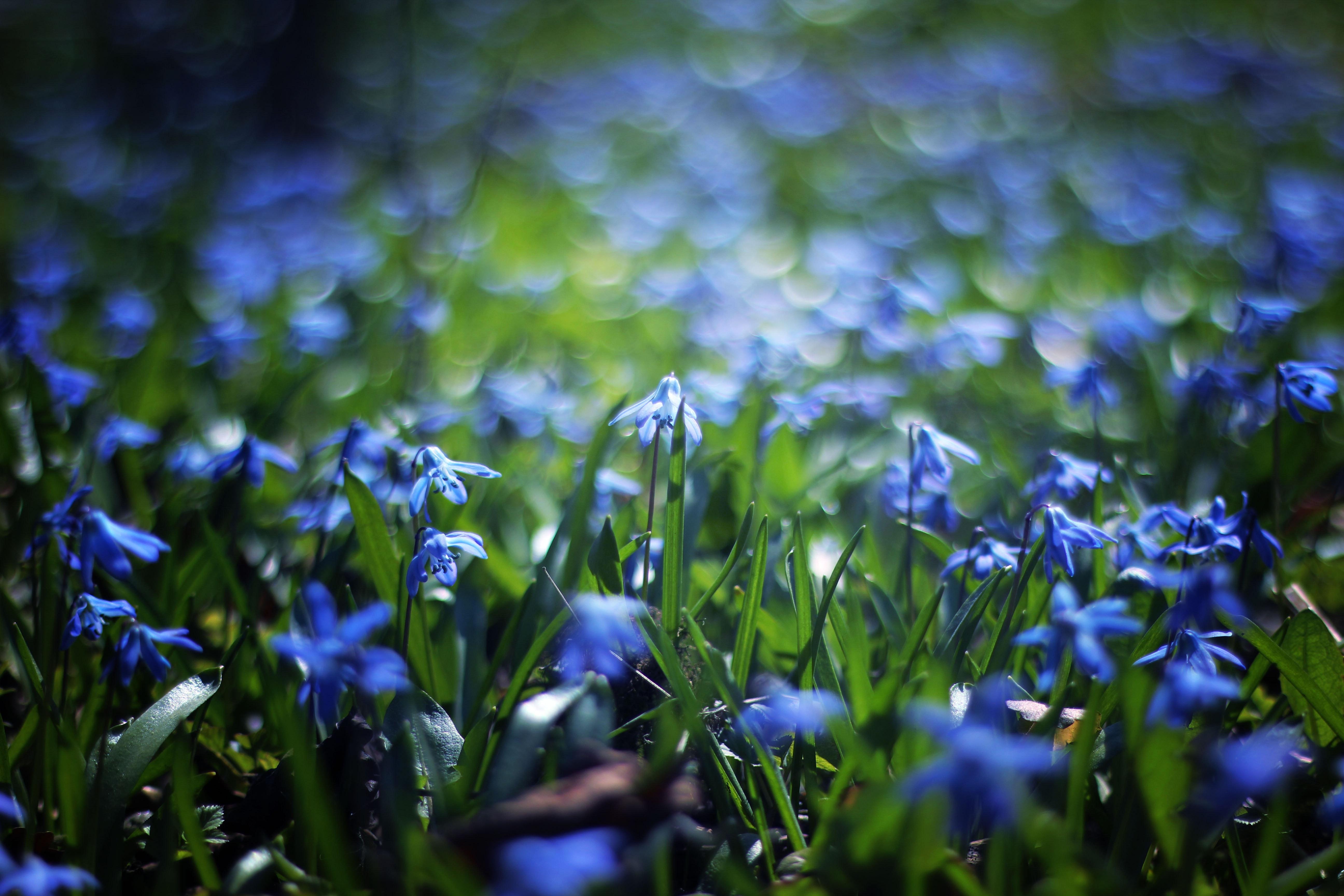 Blue Flower Daytime