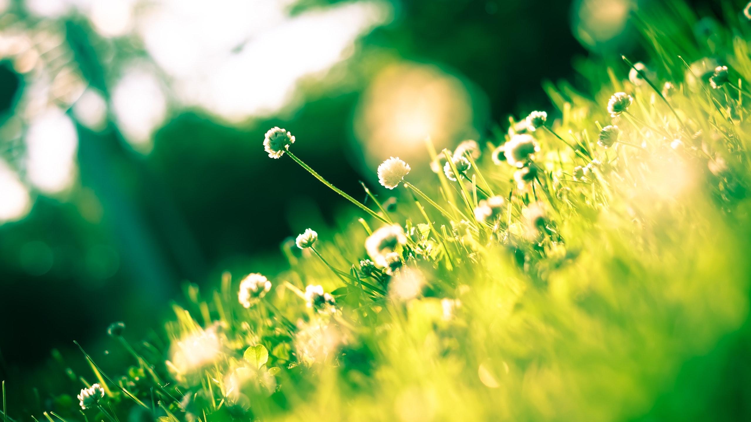 Close up photo of dandelion