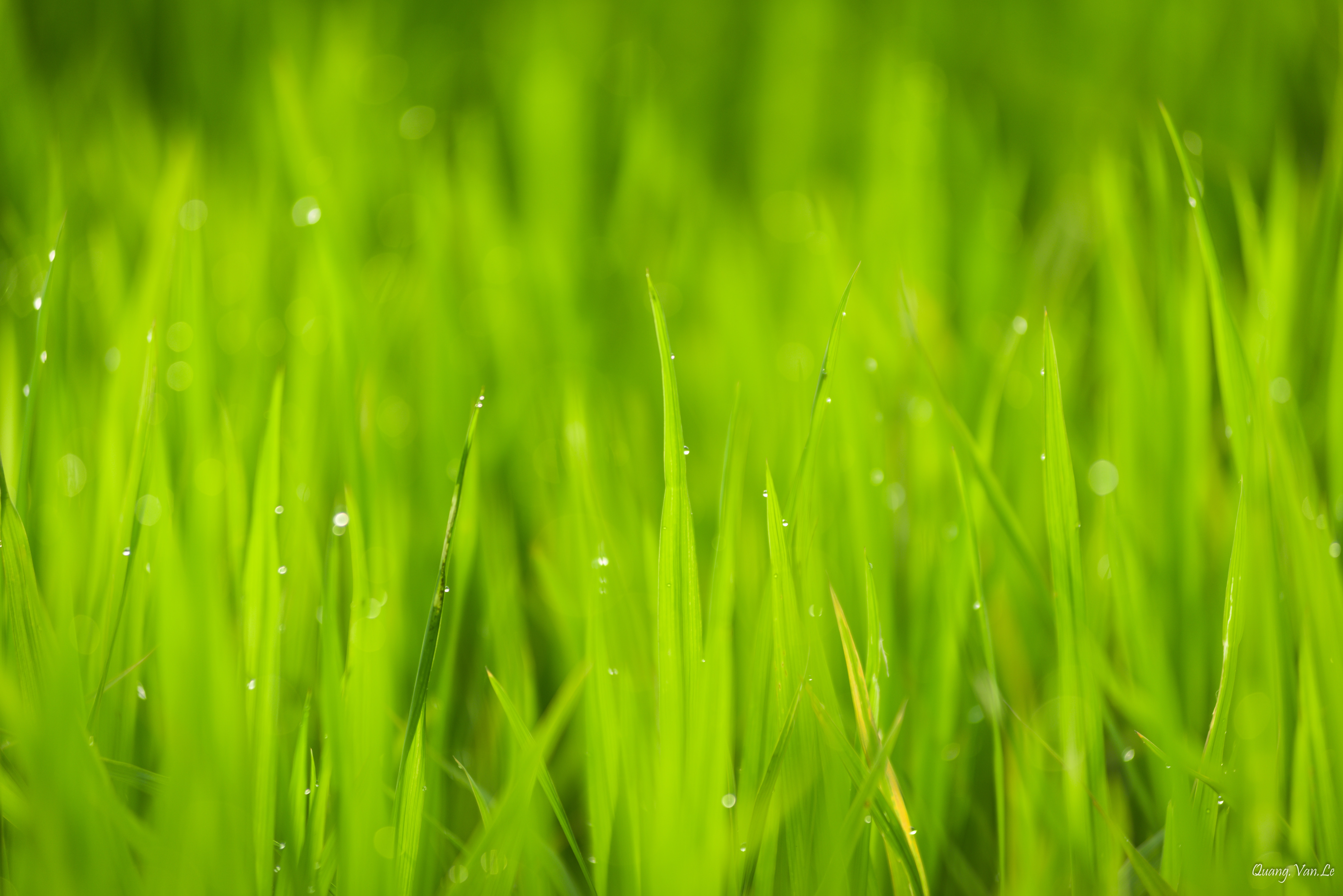 free photo close up photo of green grass under sunny sky during daytime dewdrops grass hd wallpaper free download jooinn jooinn