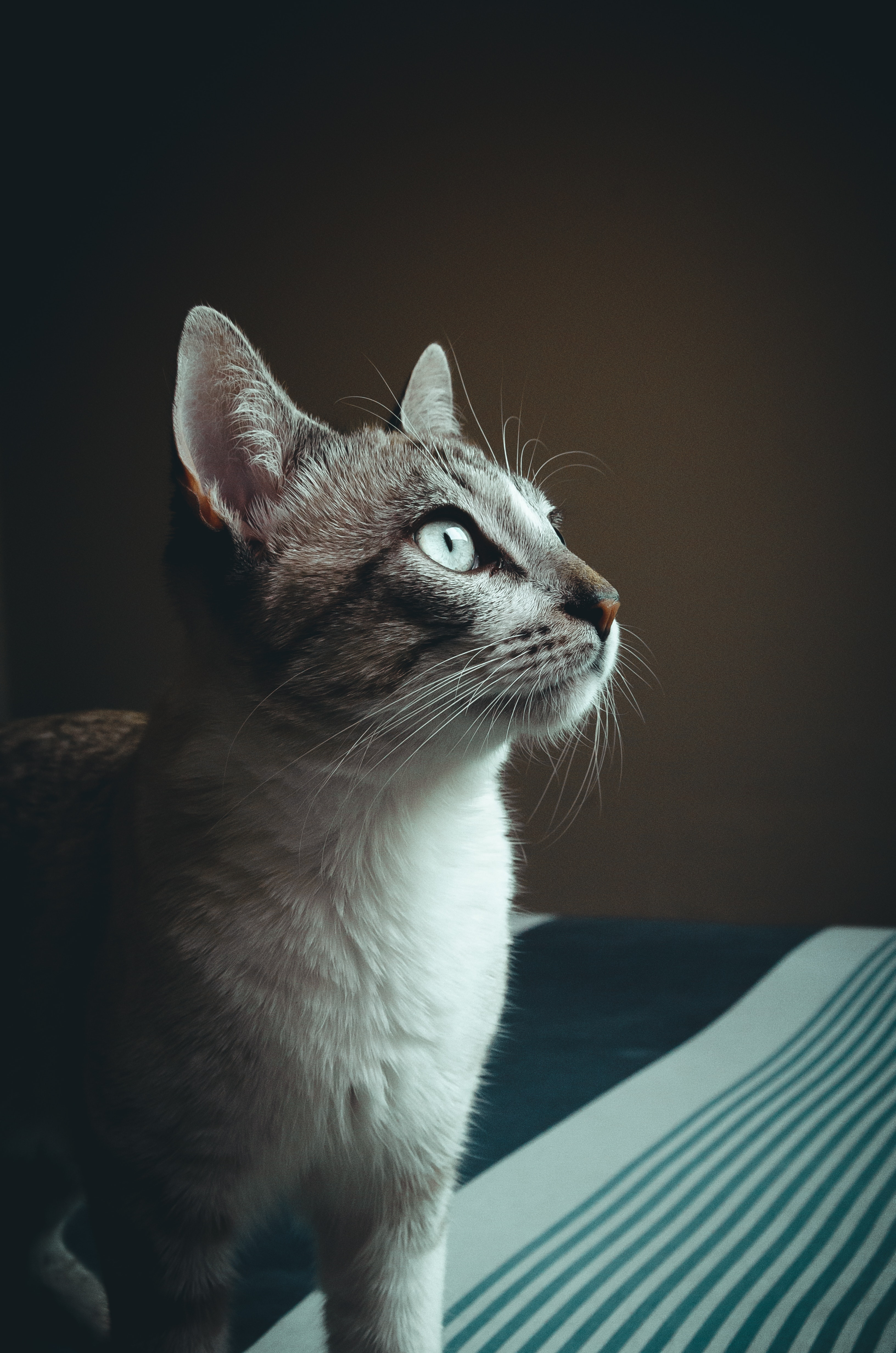 Close-up Photography of Cat, Adorable, Funny, Whiskers, Sit, HQ Photo