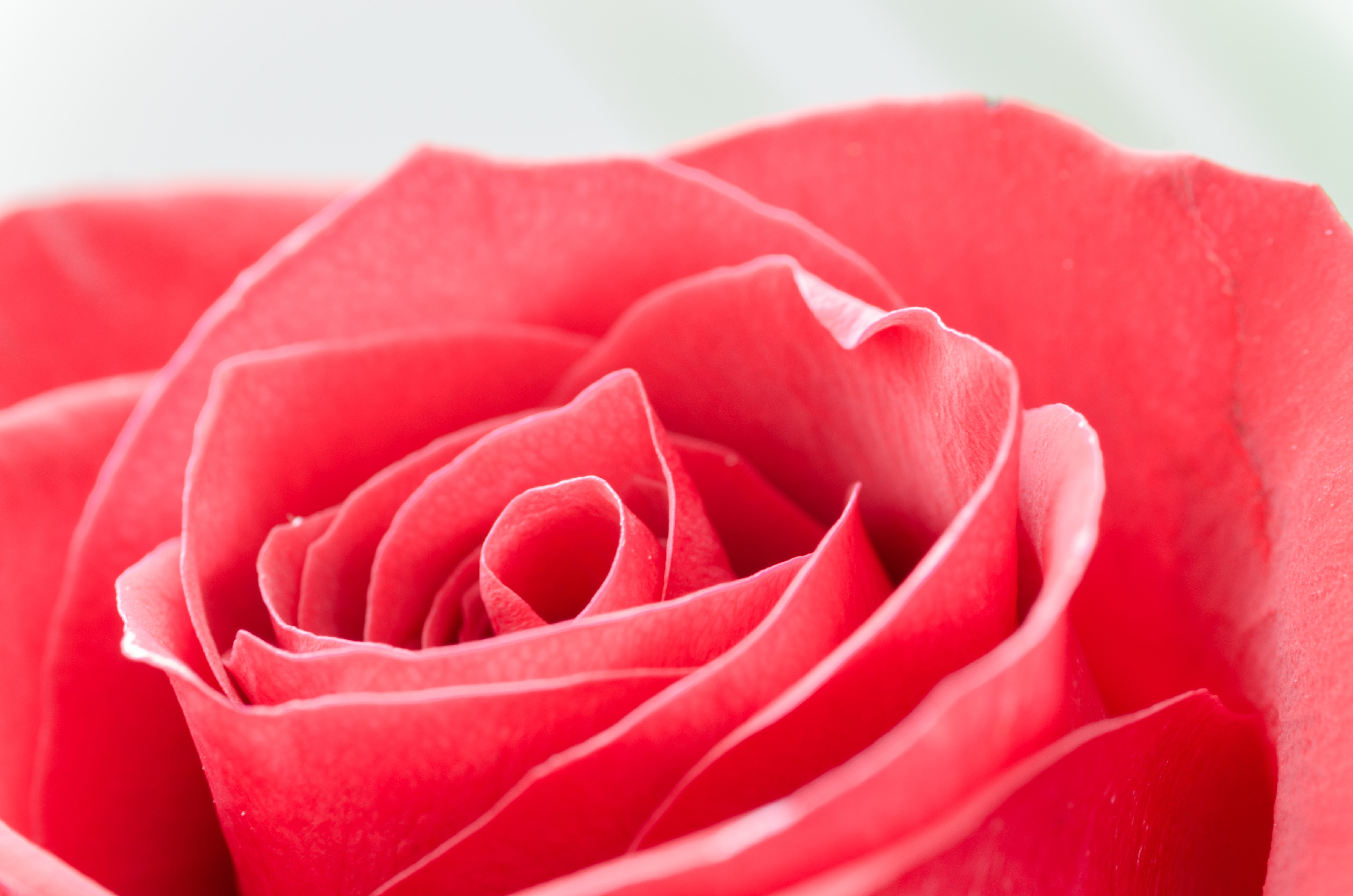 Close-Up Photography of Flower, Growth, Fresh, Fragrant, Macro, HQ Photo