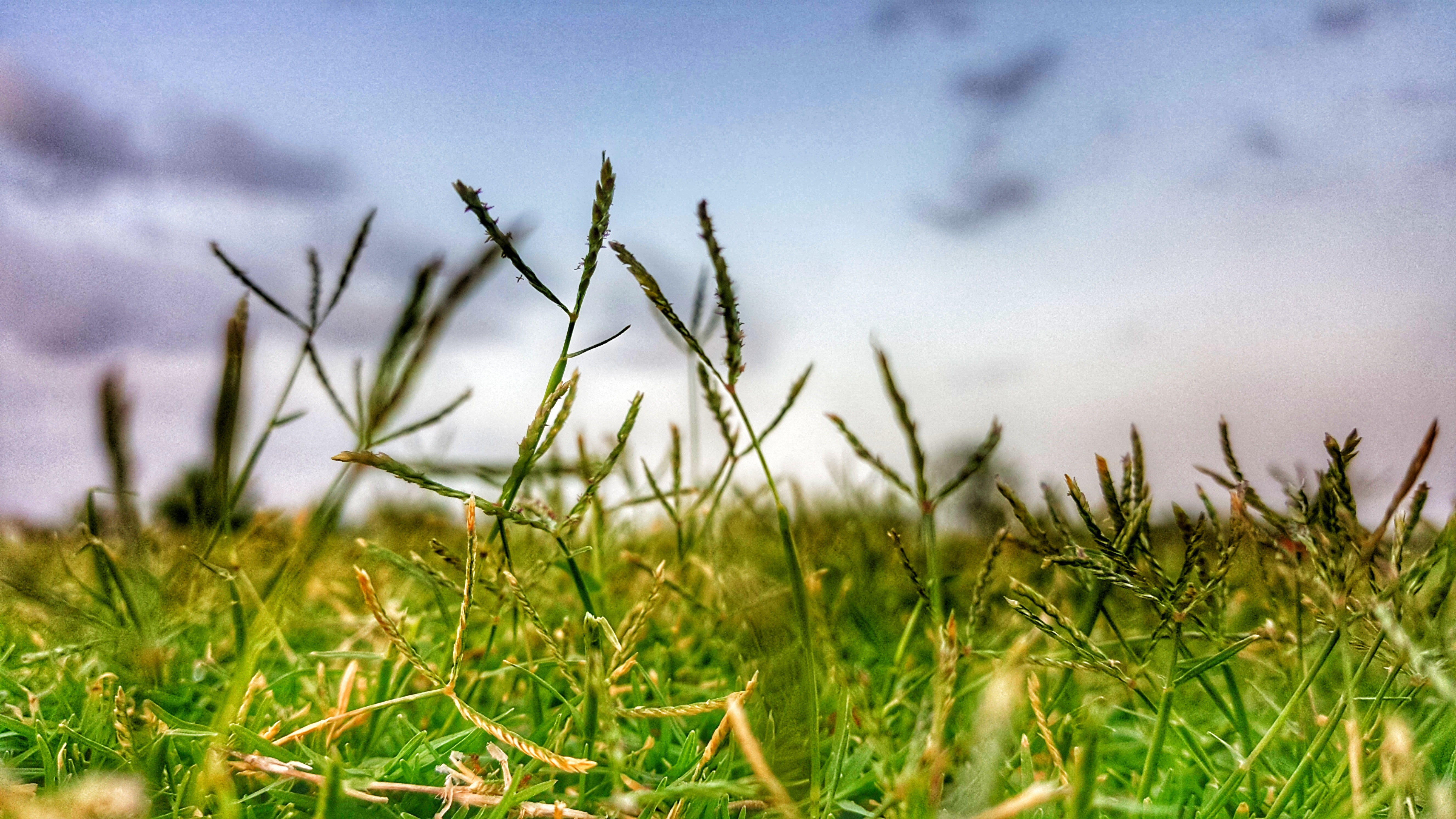 Close-up Photography of Grass, Blur, Close-up, Clouds, Cloudy sky, HQ Photo