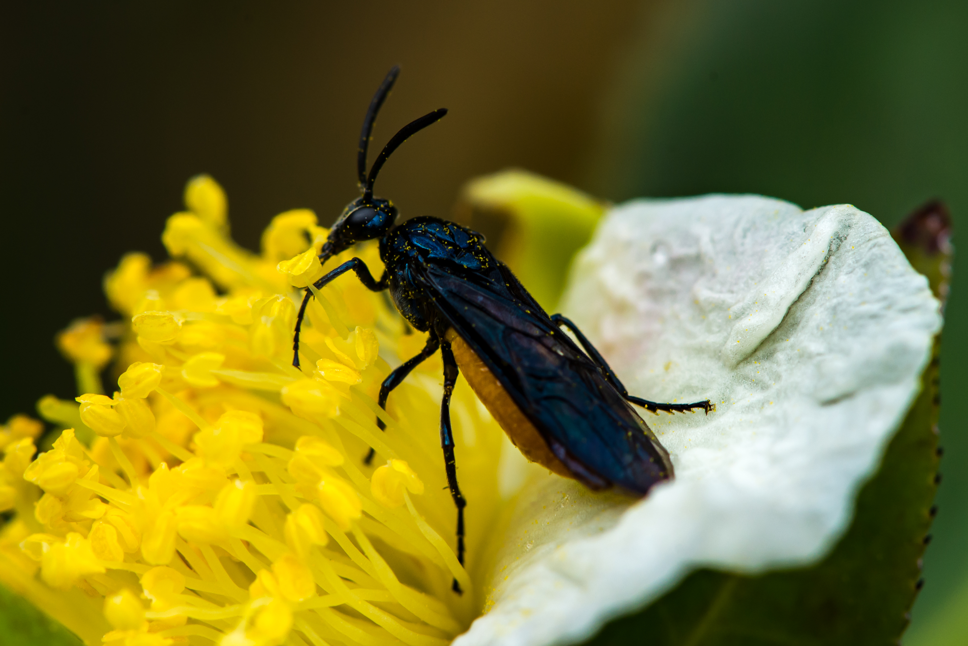 Close up VN, Macro, Insect, Depth of field, Animal, HQ Photo
