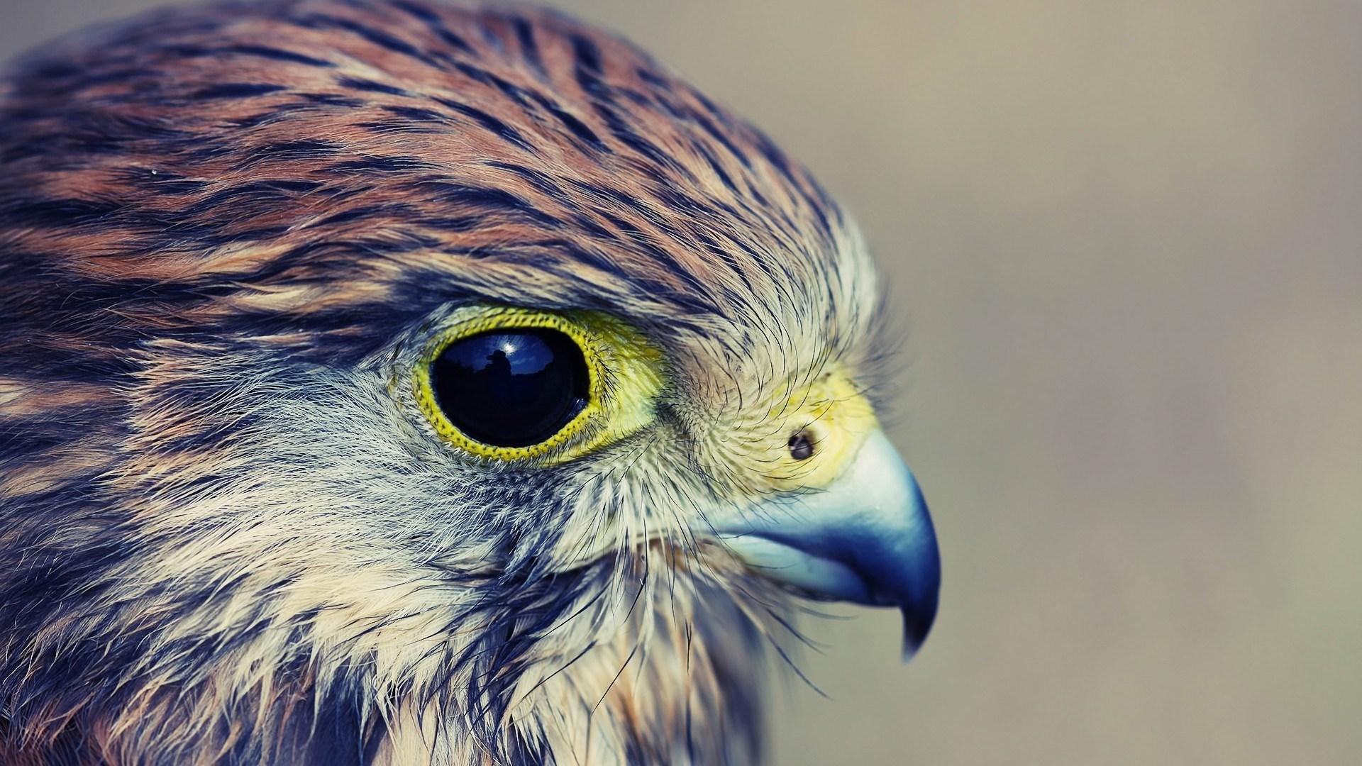 Bird of Prey Hawk Close-Up #6995982