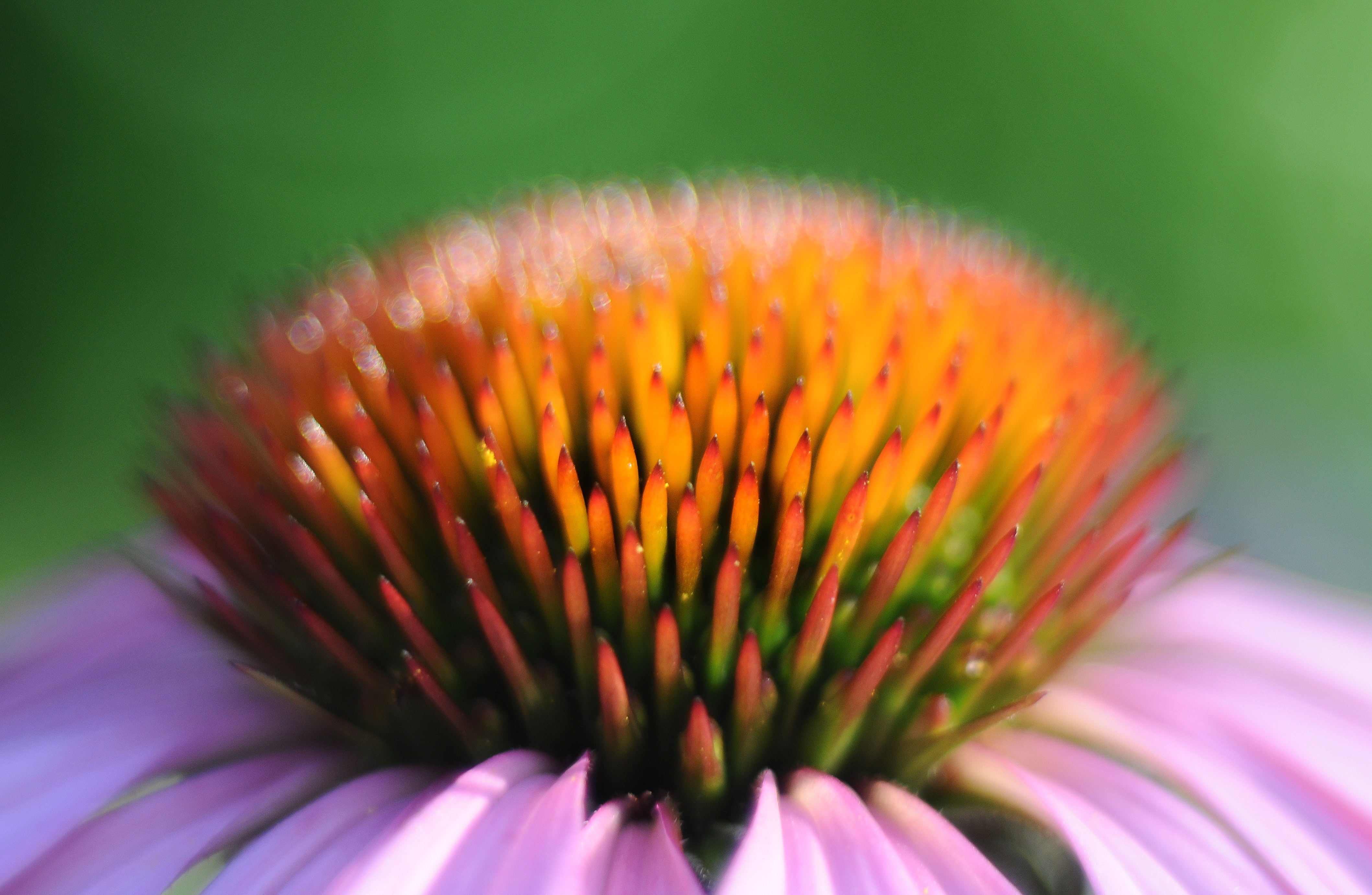 Free stock photo of botany, close to, close-up view