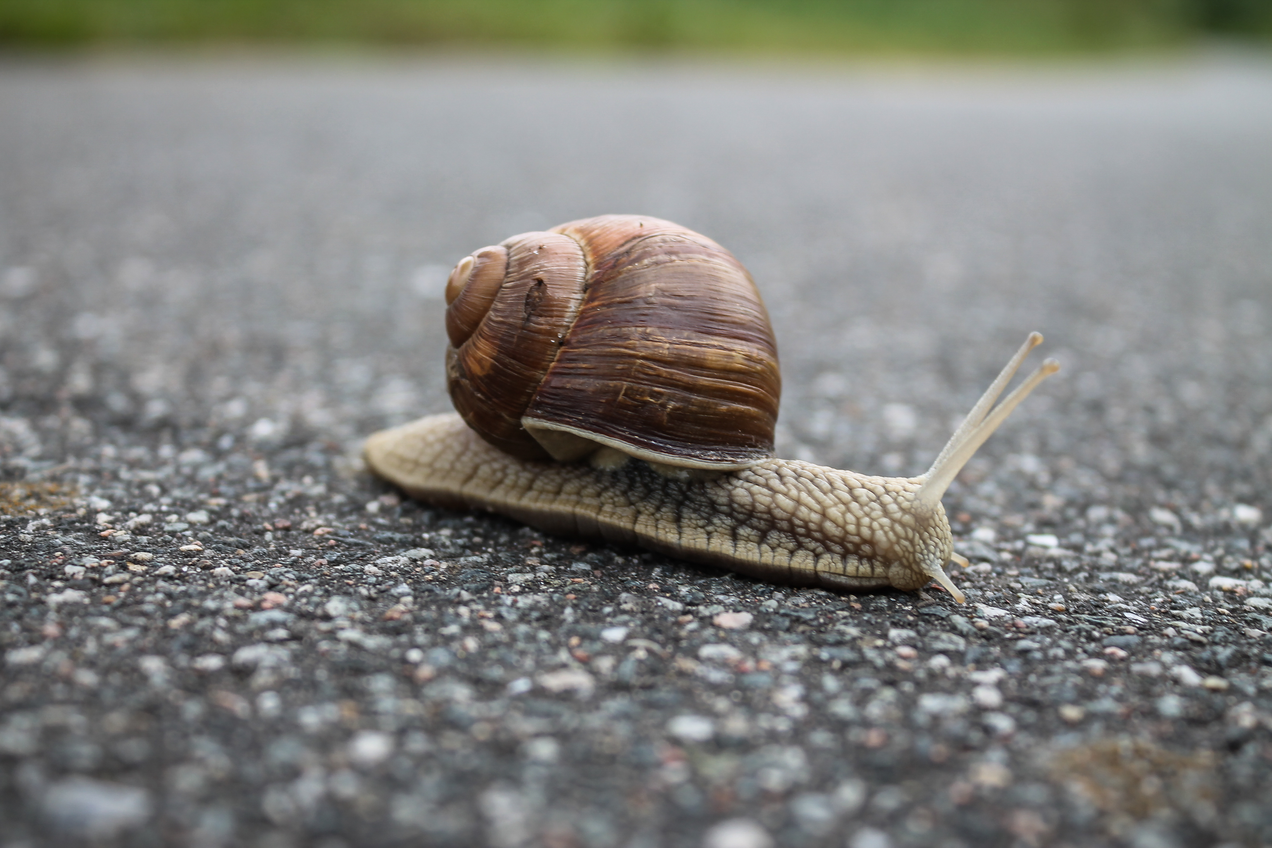 Closeup of snail on the street photo
