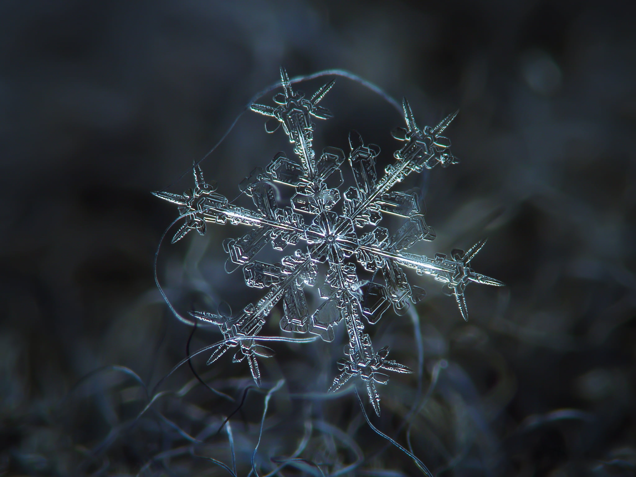 Macro photography of snowflake HD wallpaper | Wallpaper Flare