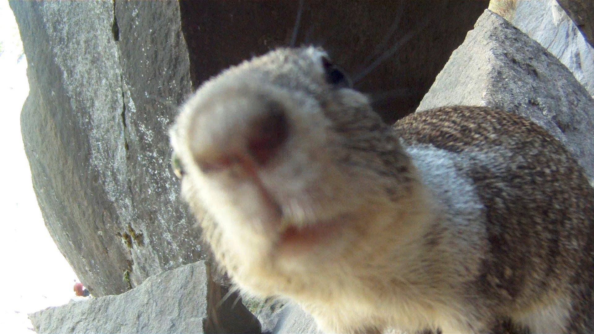 Close-up of squirrel photo