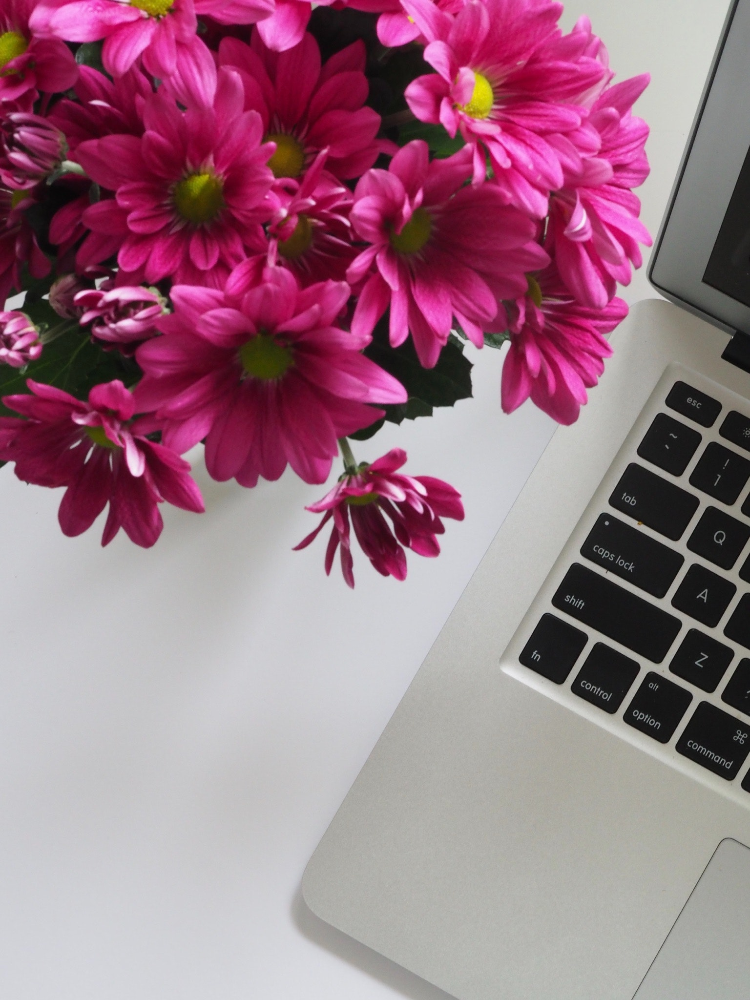 Closeup Photo of Pink Petaled Flowers, Laptop, Keyboard, From above, Office, HQ Photo