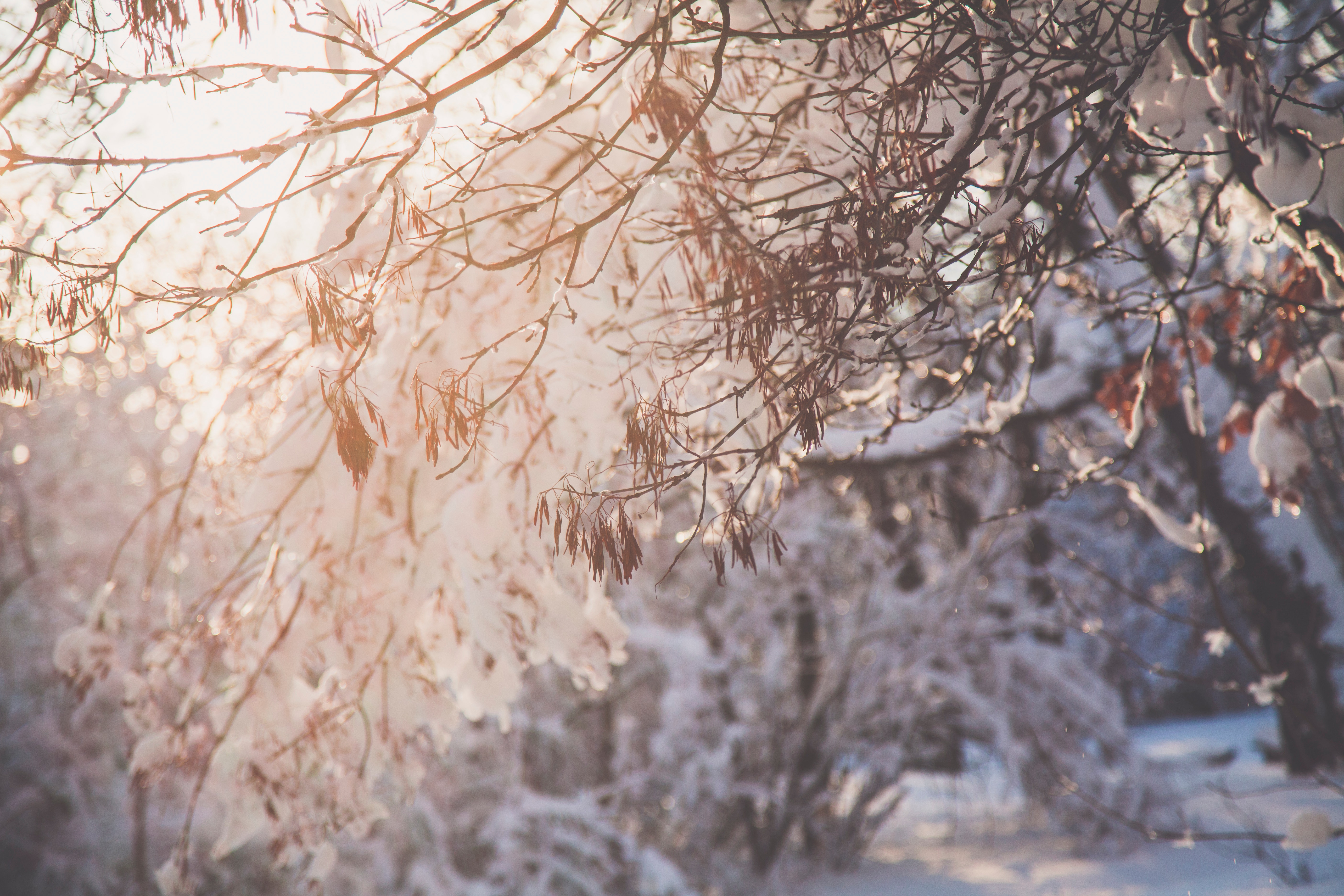 Closeup photo of tree branch with snow