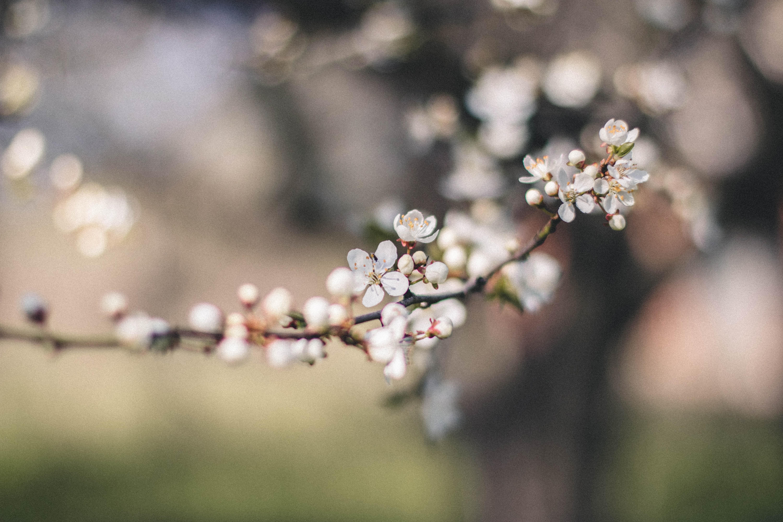 Free Photo Closeup Photography Of White Petal Flower Nature