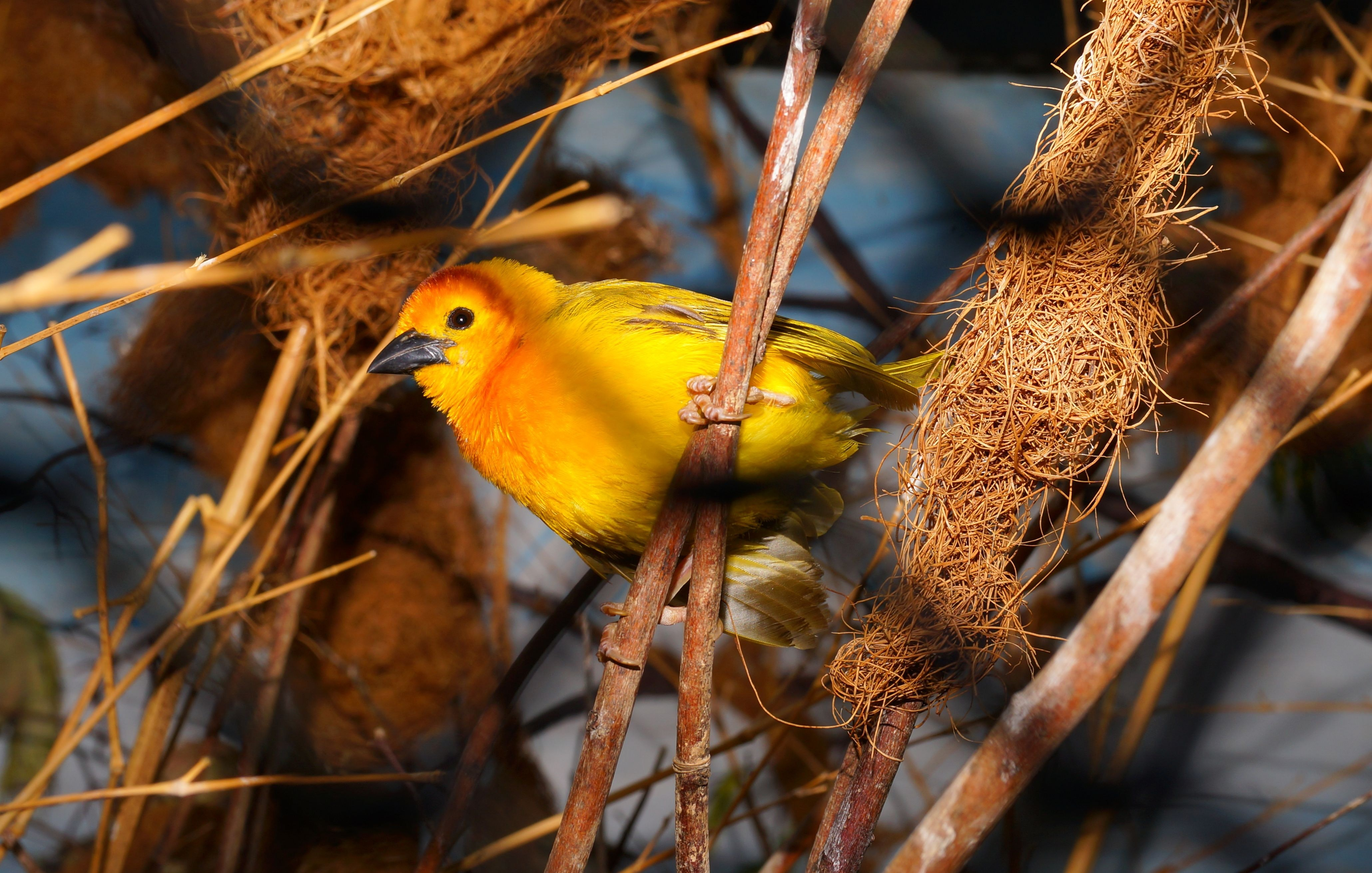 Closeup photography of yellow bird perched