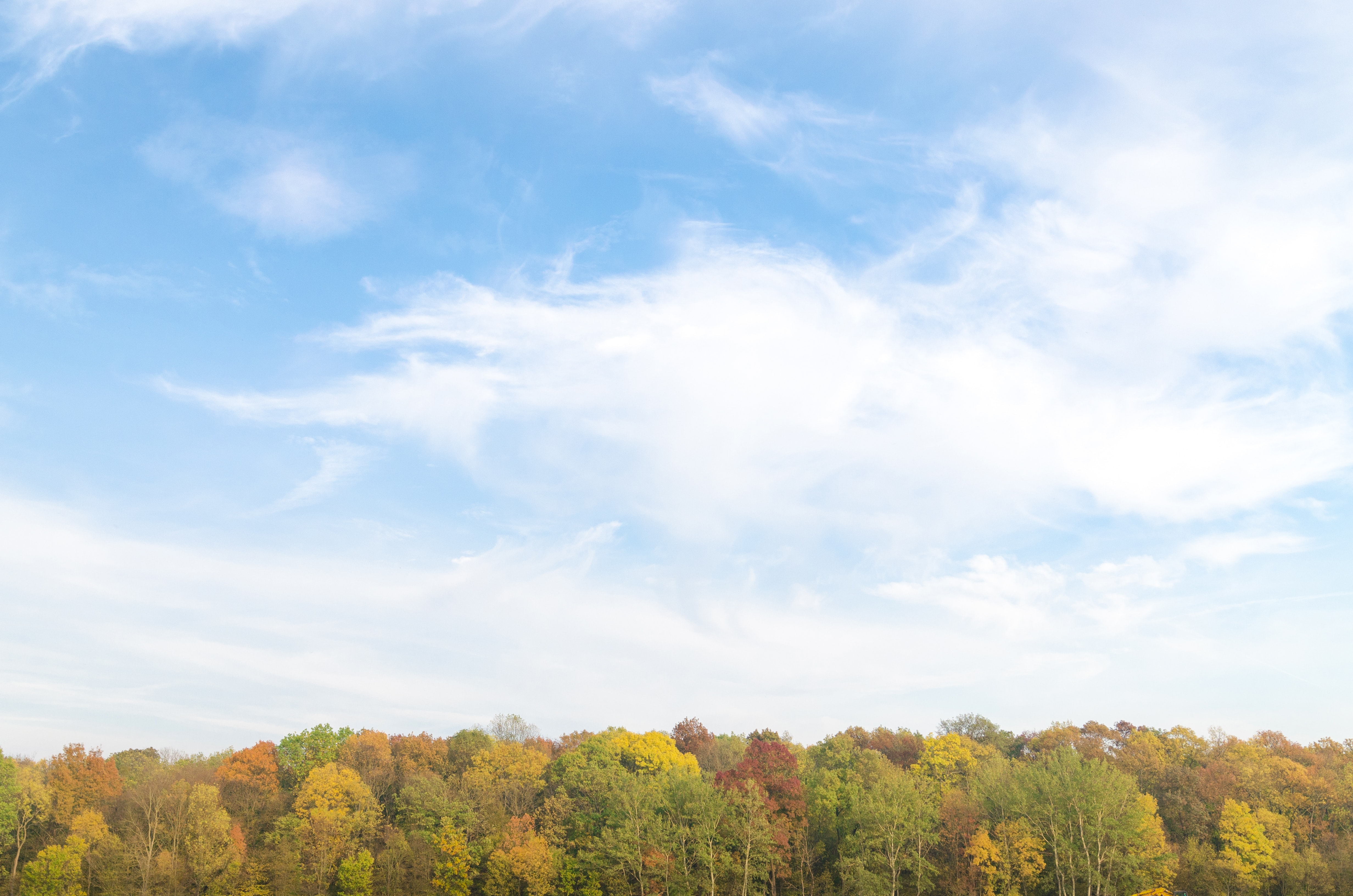 Free Photo of Autumn Forest and cloudy Sky