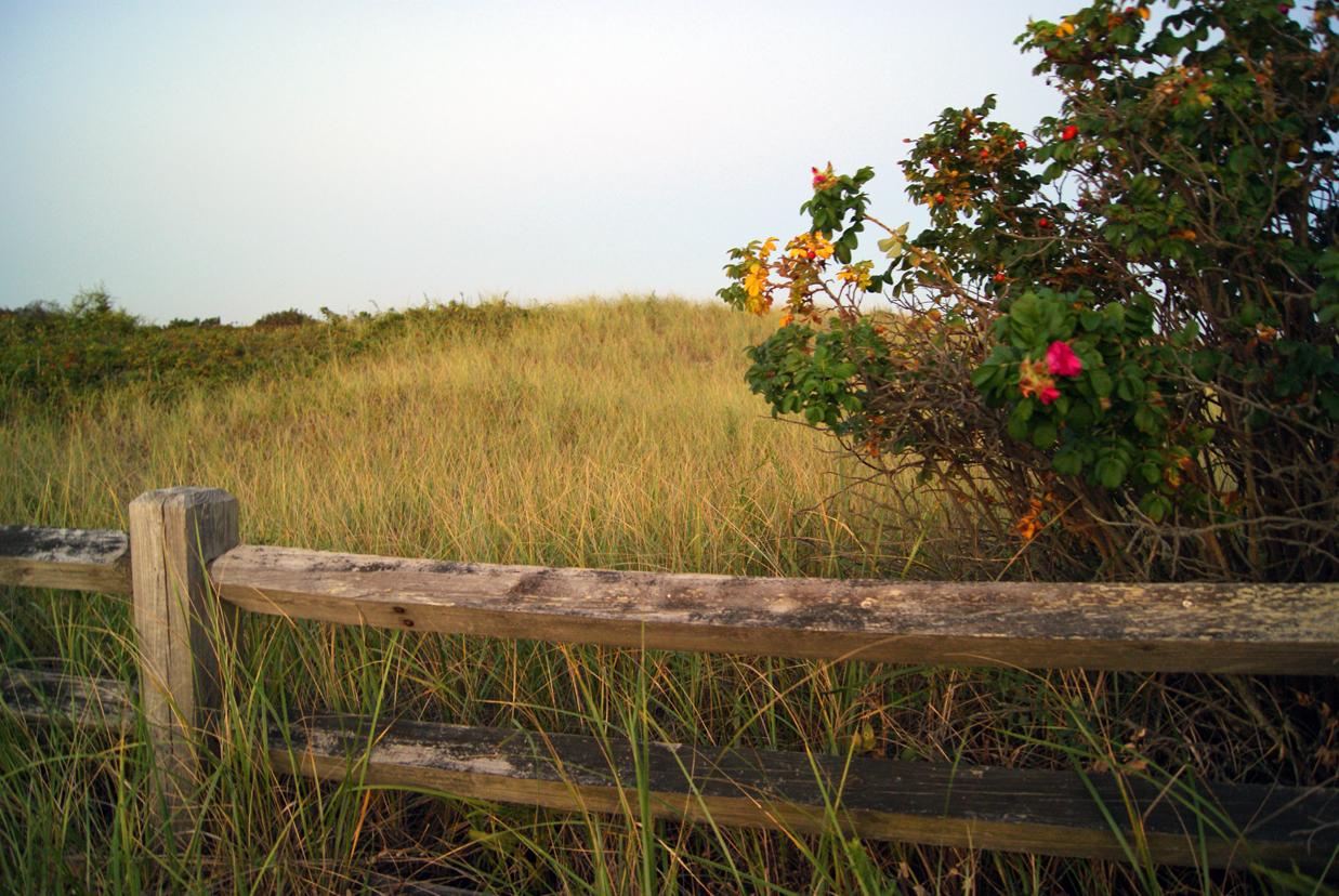 Coastal Field, Sun, Outdoors, Paradise, Reflection, HQ Photo