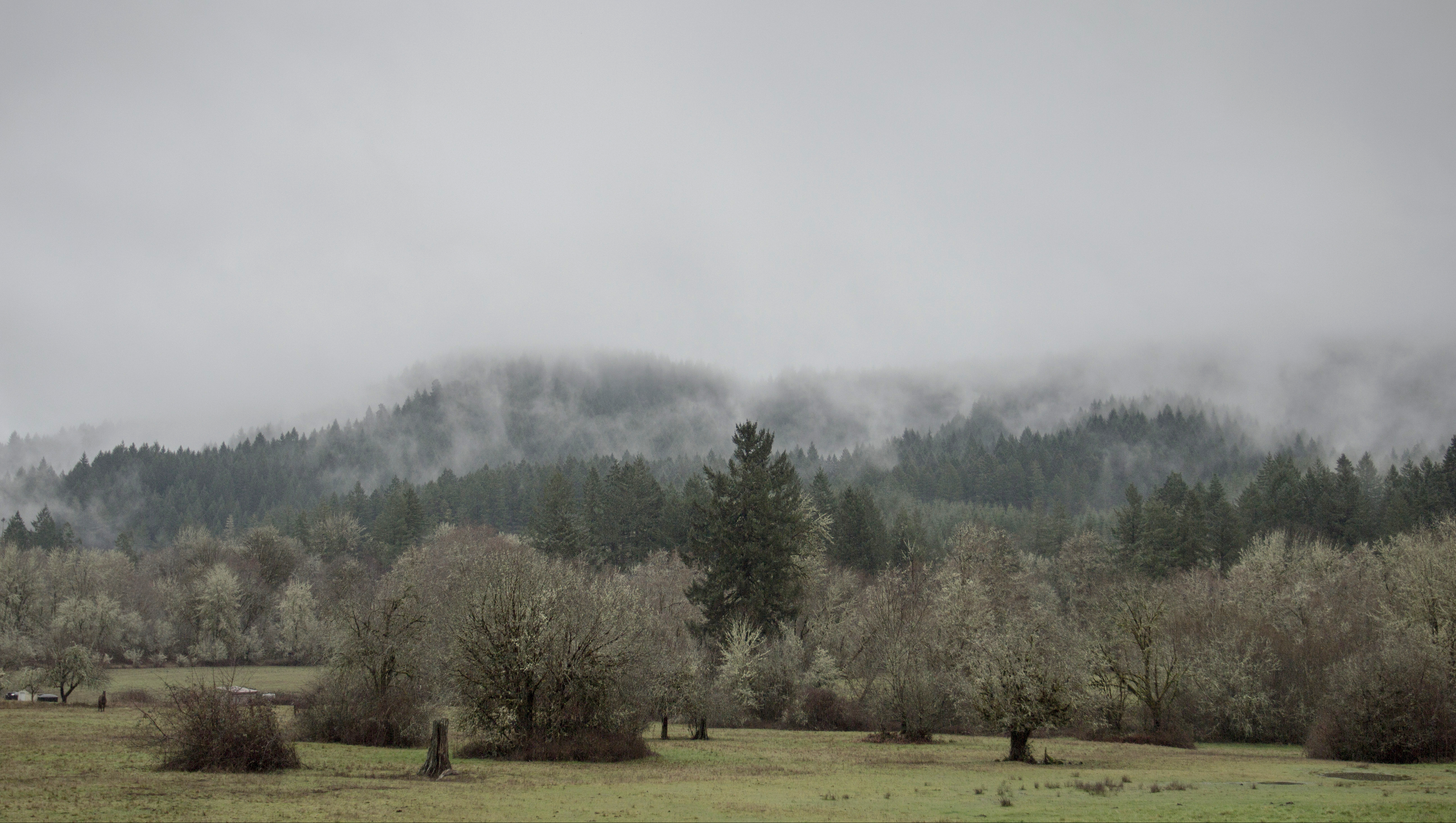 Coastal range in the winter, Oregon, Sky, Oregon, Snow, Tree, HQ Photo