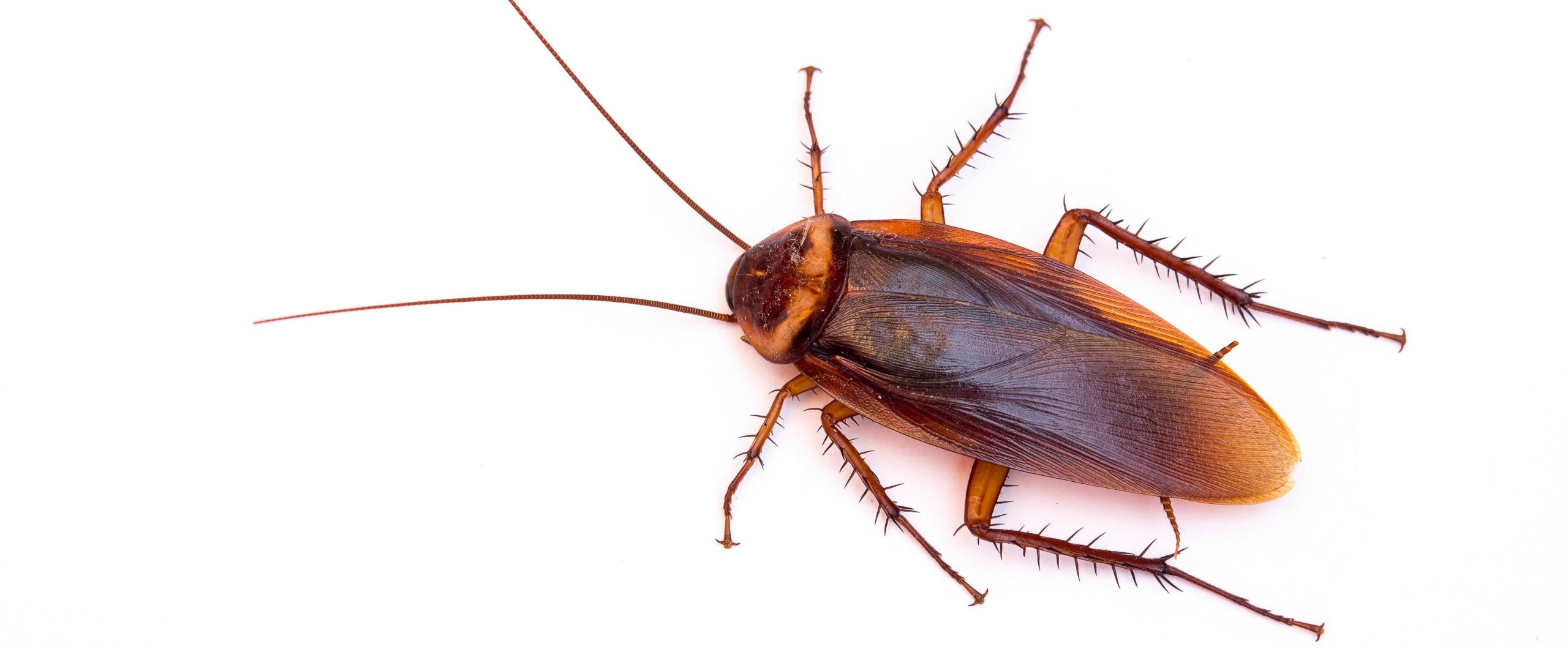 Cockroach photo