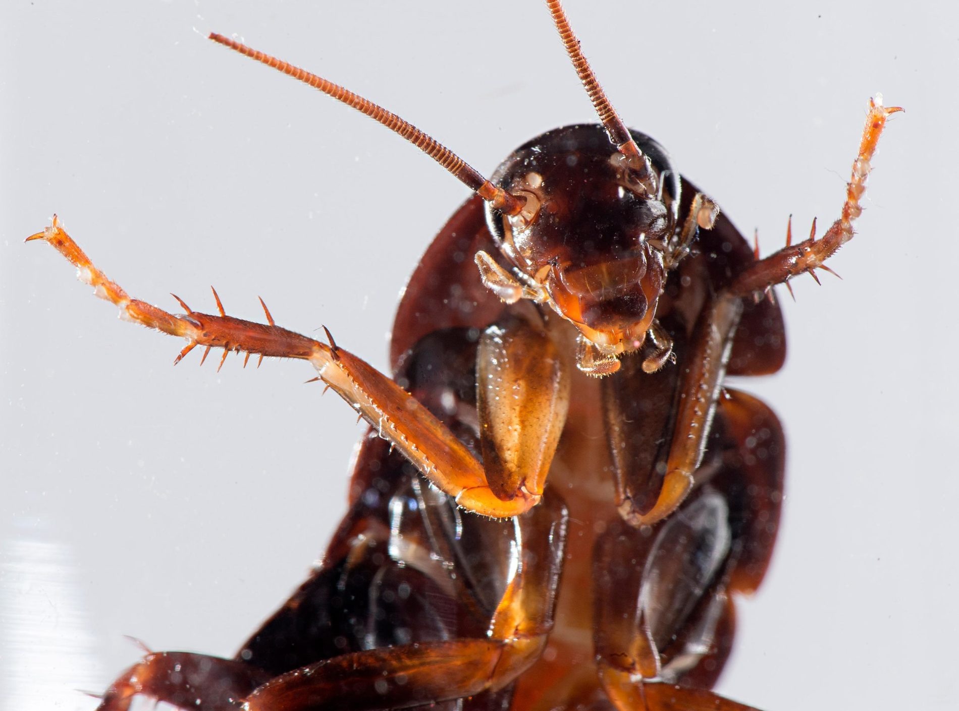 9 Creepy Cockroach Facts You Didn't Want To Know