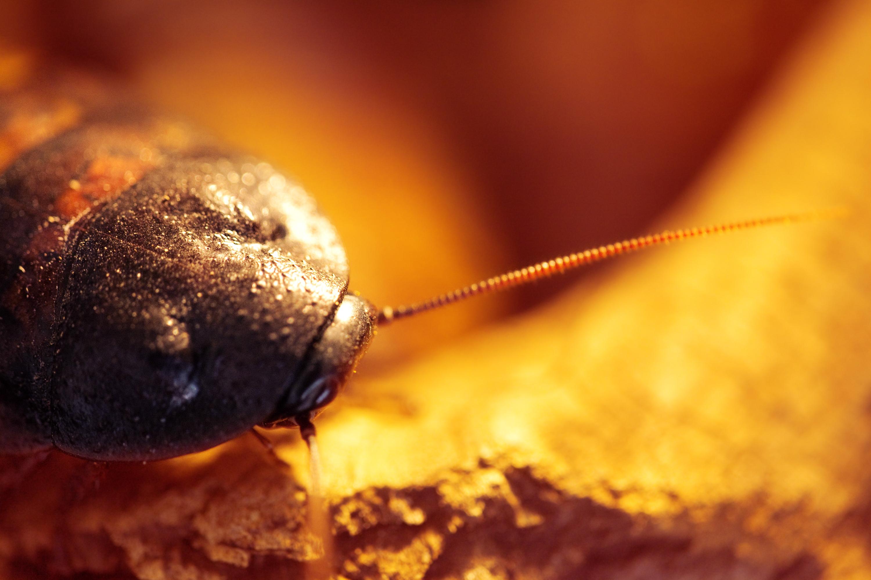cockroach, Beetle, Bug, Closeup, Dirty, HQ Photo