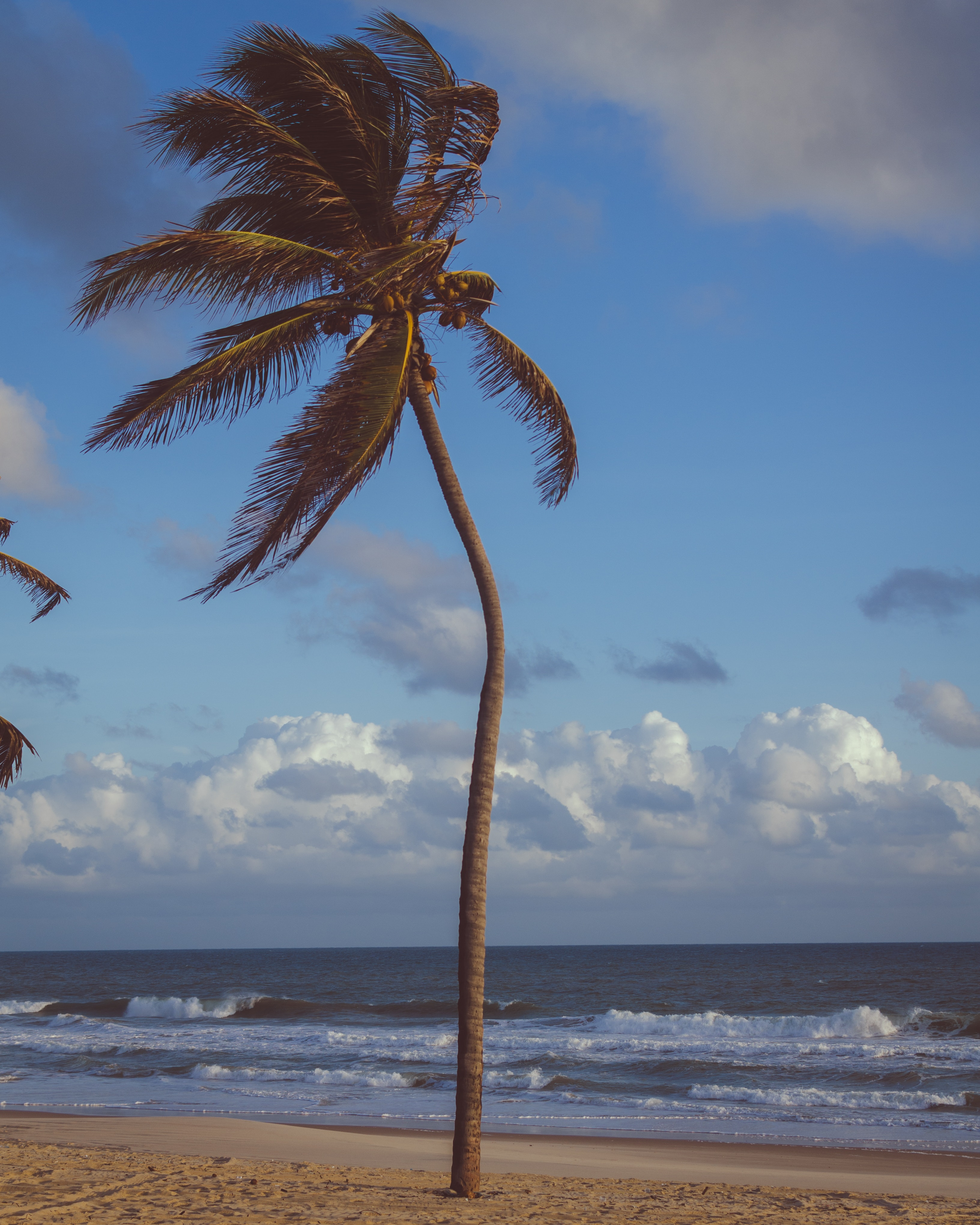 Coconut palm tree near sea photo