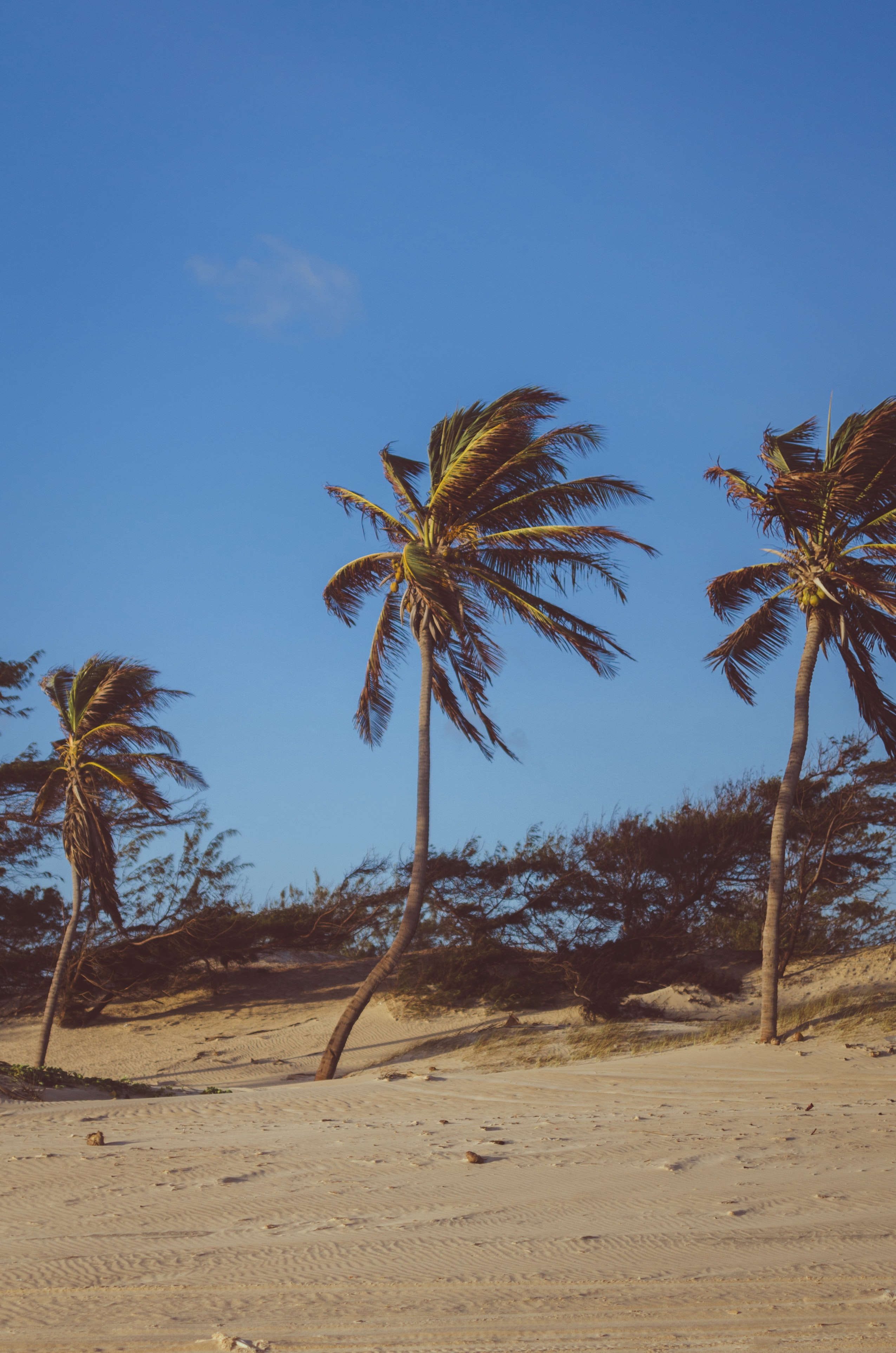 Coconut trees on brown soil under blue sky photo