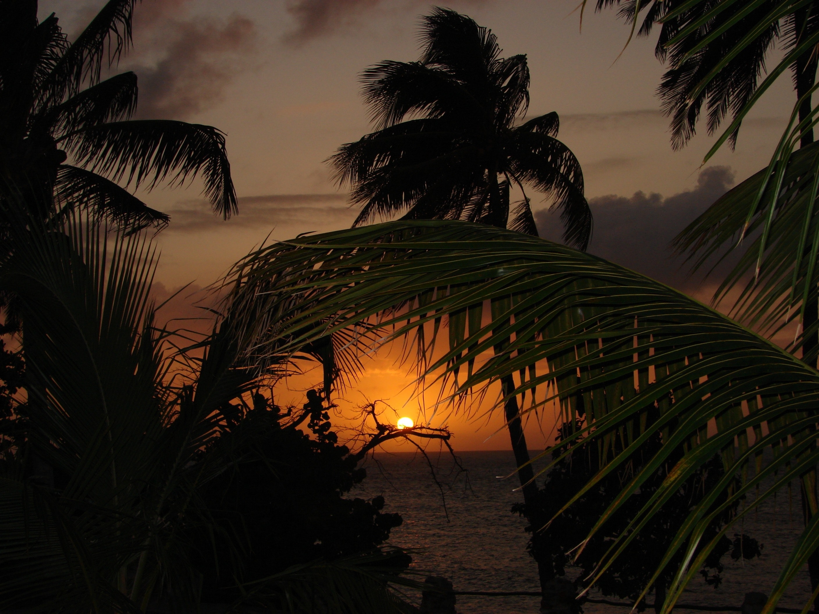 CoconutTree Besides Body of Water during Sunset, Beach, Seaside, Water, Tropical, HQ Photo