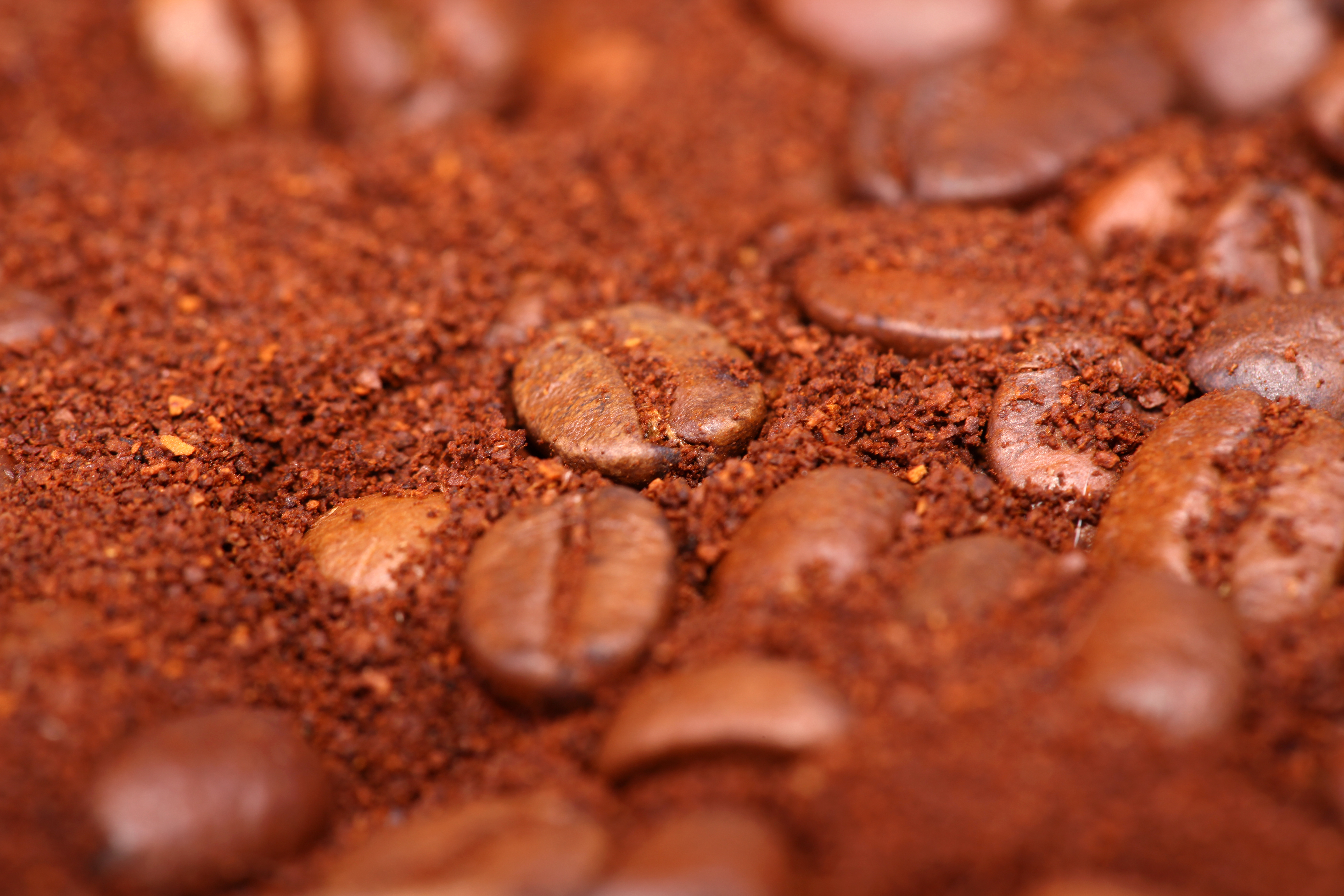coffee beans, Mocha, Nobody, Non-alcoholic, Macro, HQ Photo
