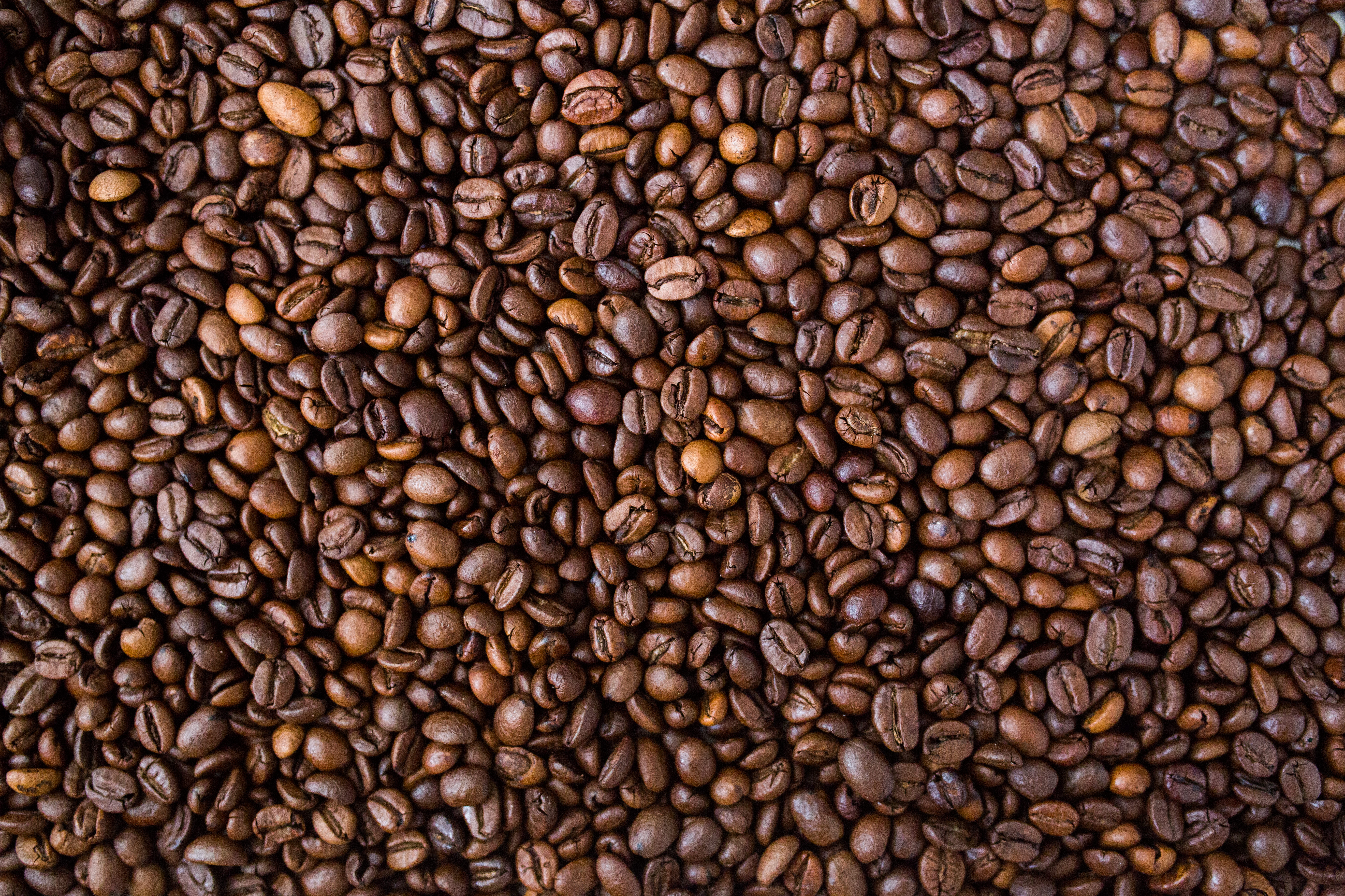 Brown coffee beans photo