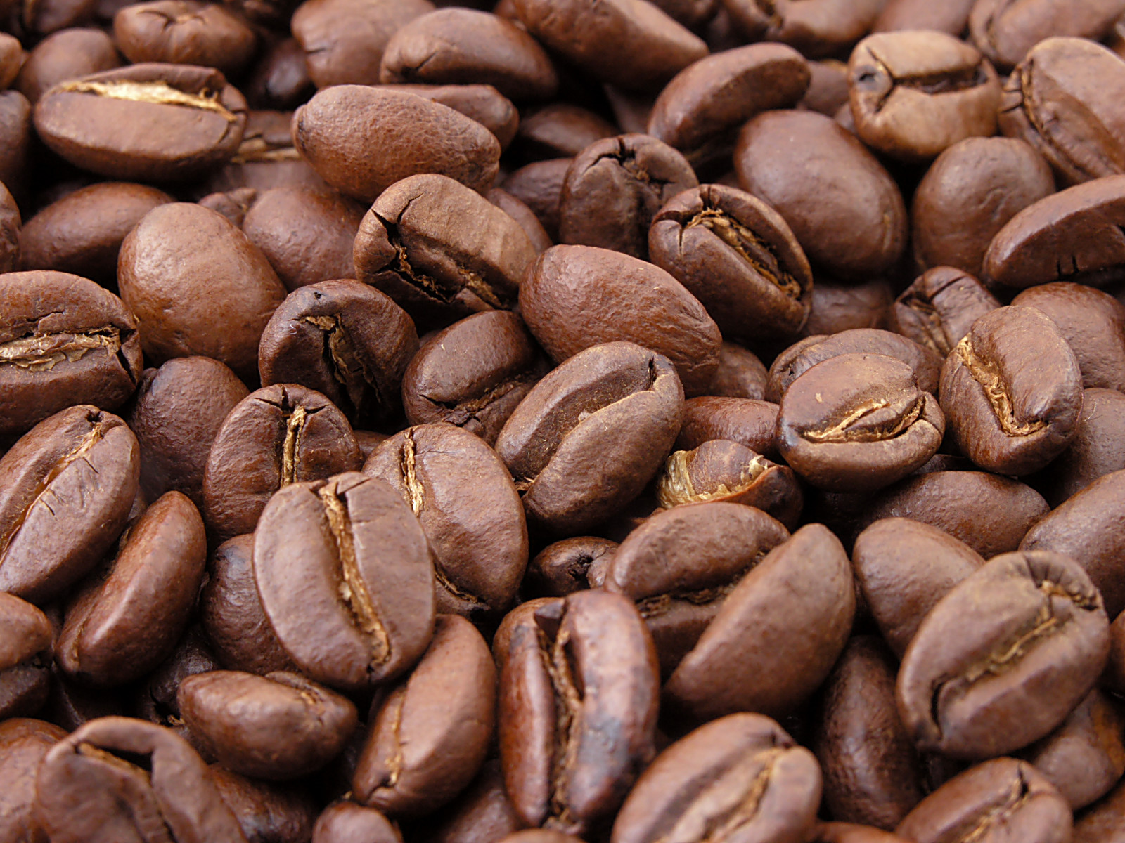 Single coffee bean photo